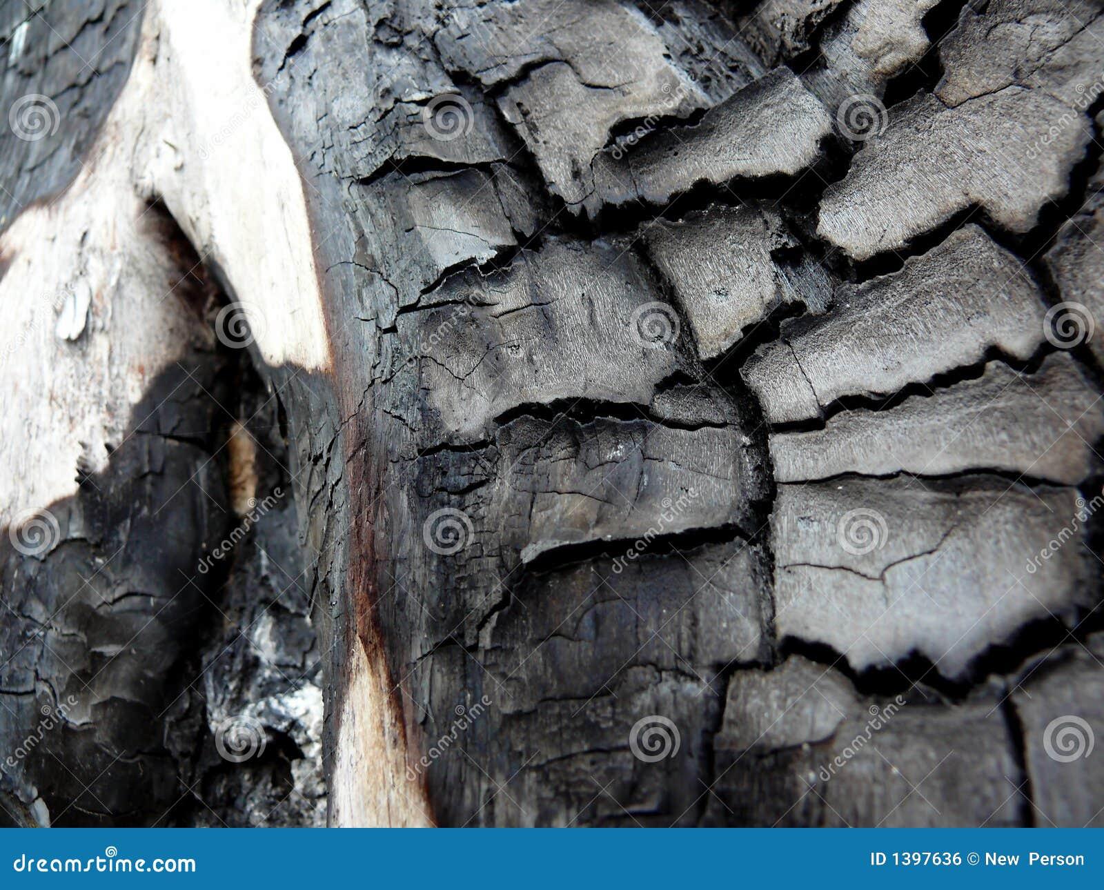 Árvore queimada