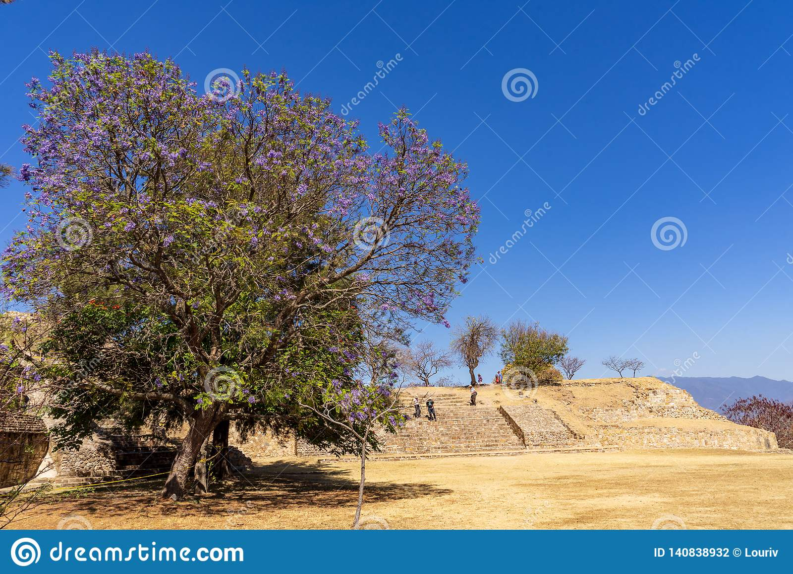 Árvore roxa em ruínas de Zapotec no local de Monte Alban, México