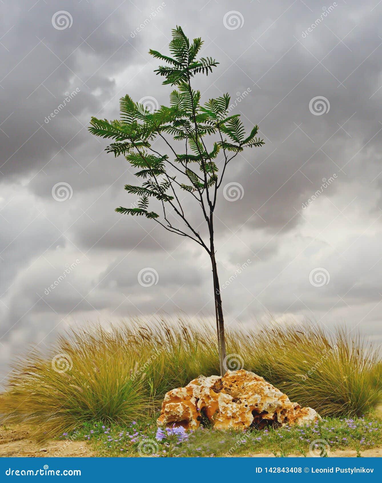 Árvore só em um parque antes de um temporal
