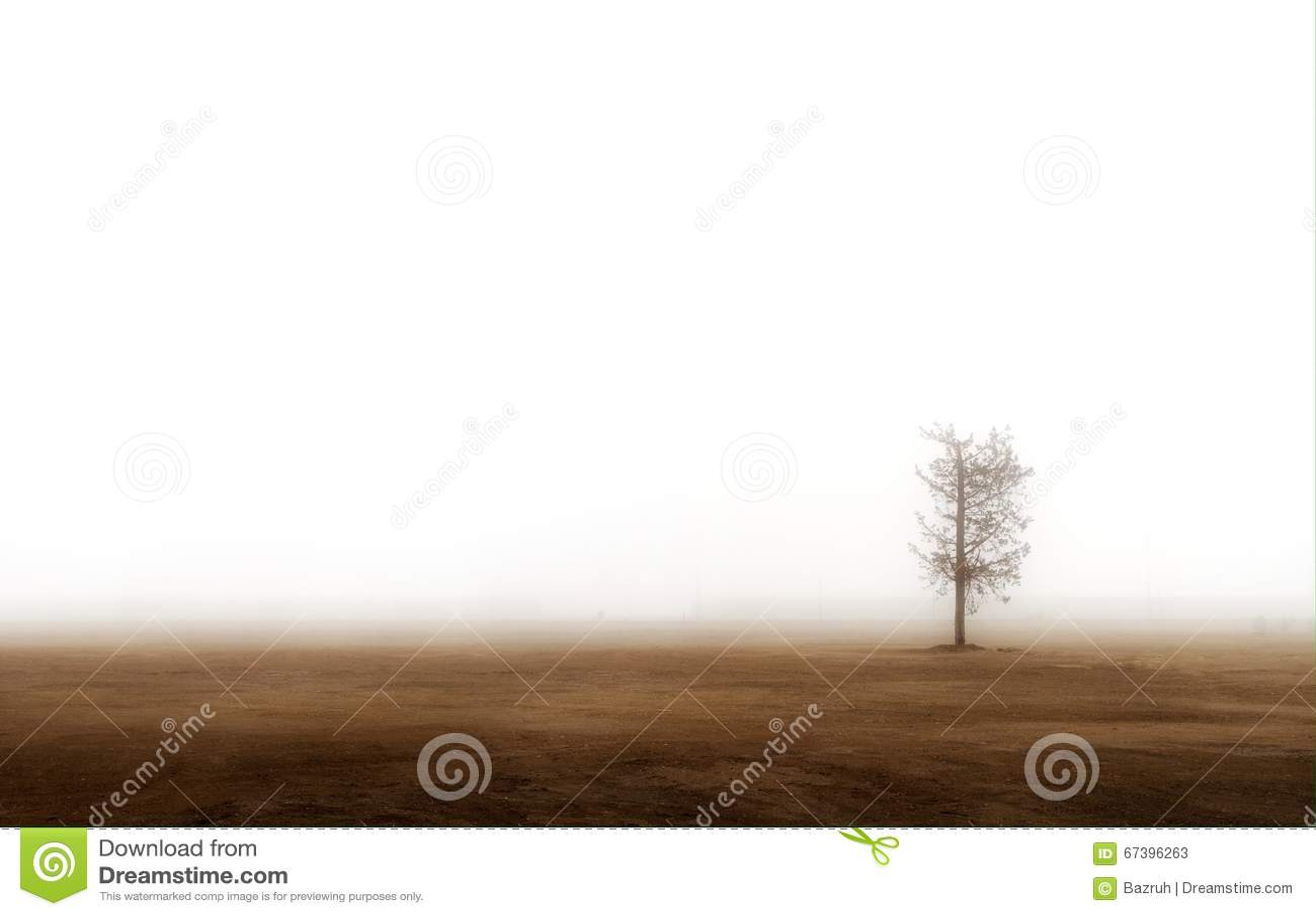 Árvore só na névoa