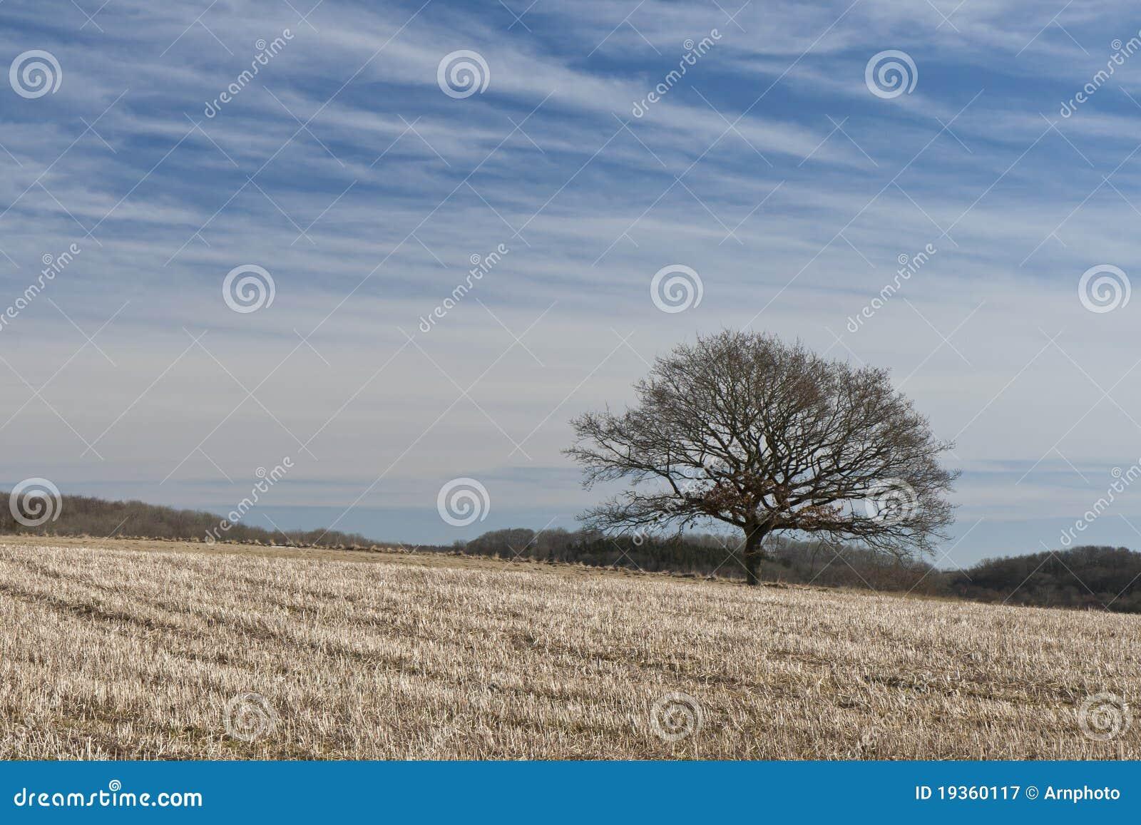 Árvore só no campo