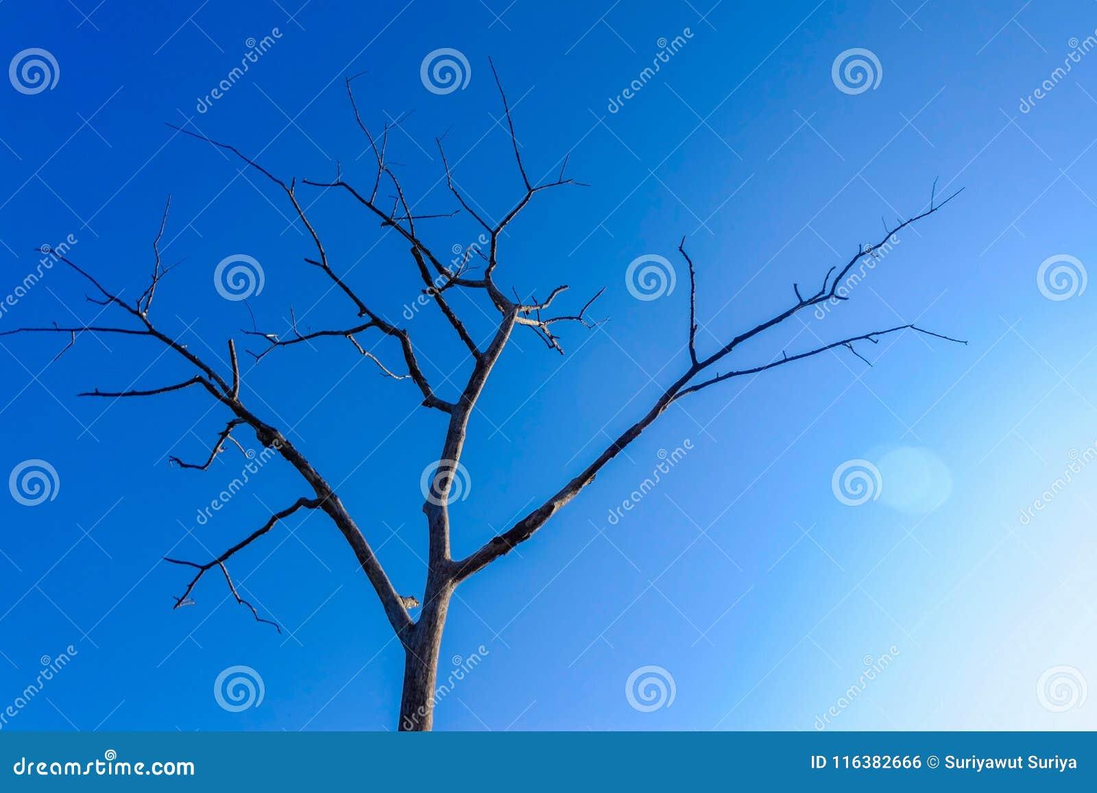 Árvore seca inoperante no céu azul Morte e conceito vivo