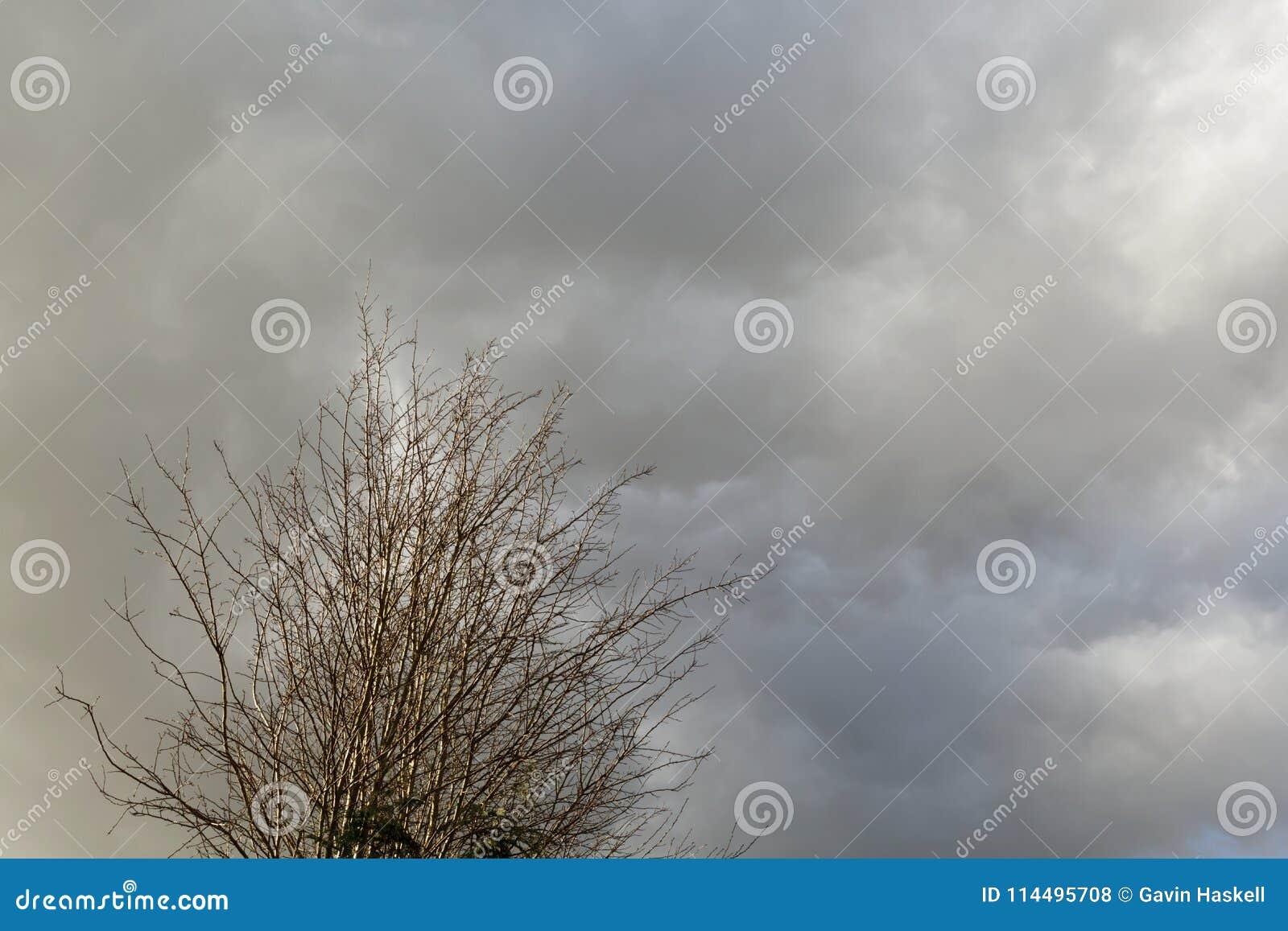 A árvore senta-se sob um céu nebuloso