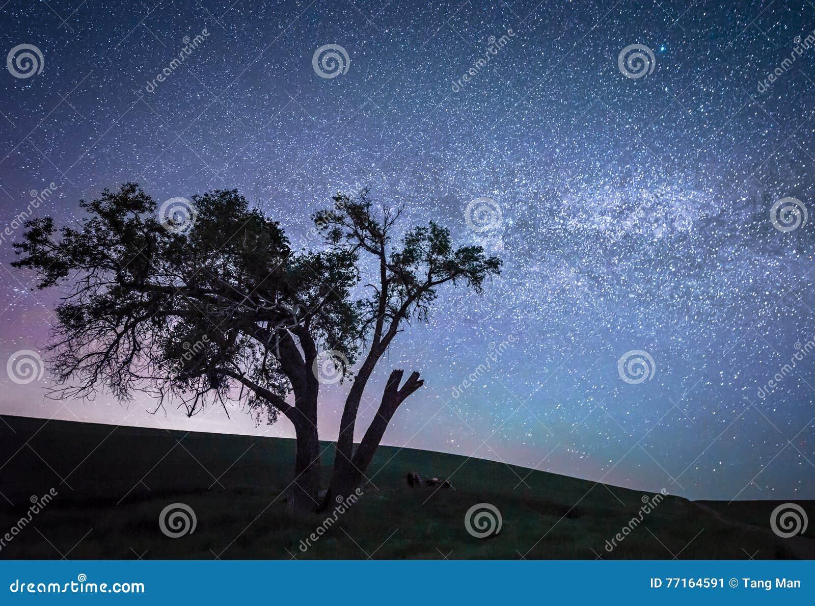 A árvore solitária