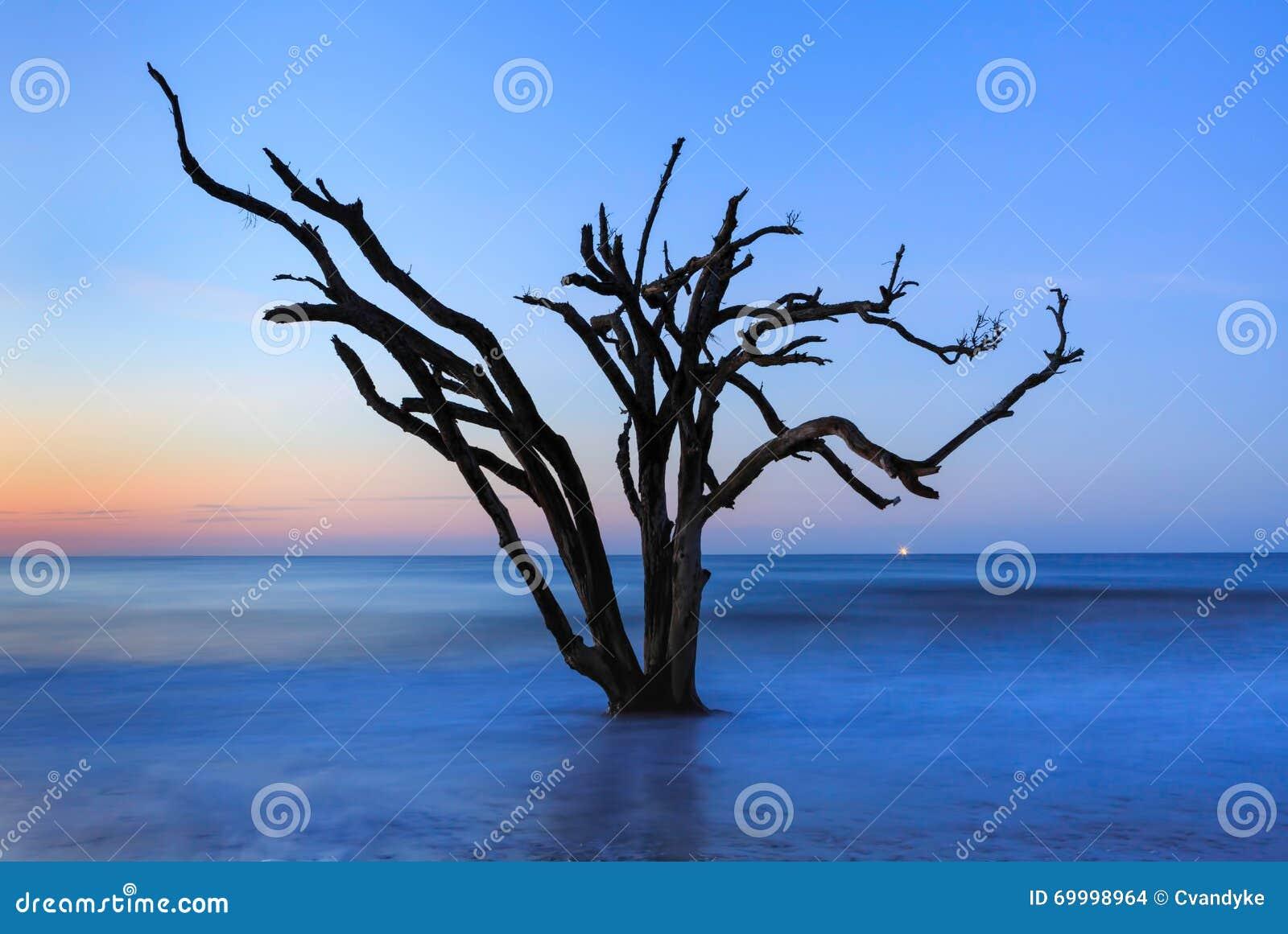 Árvore solitária na ilha Carolina Botany Bay sul de Edisto do oceano