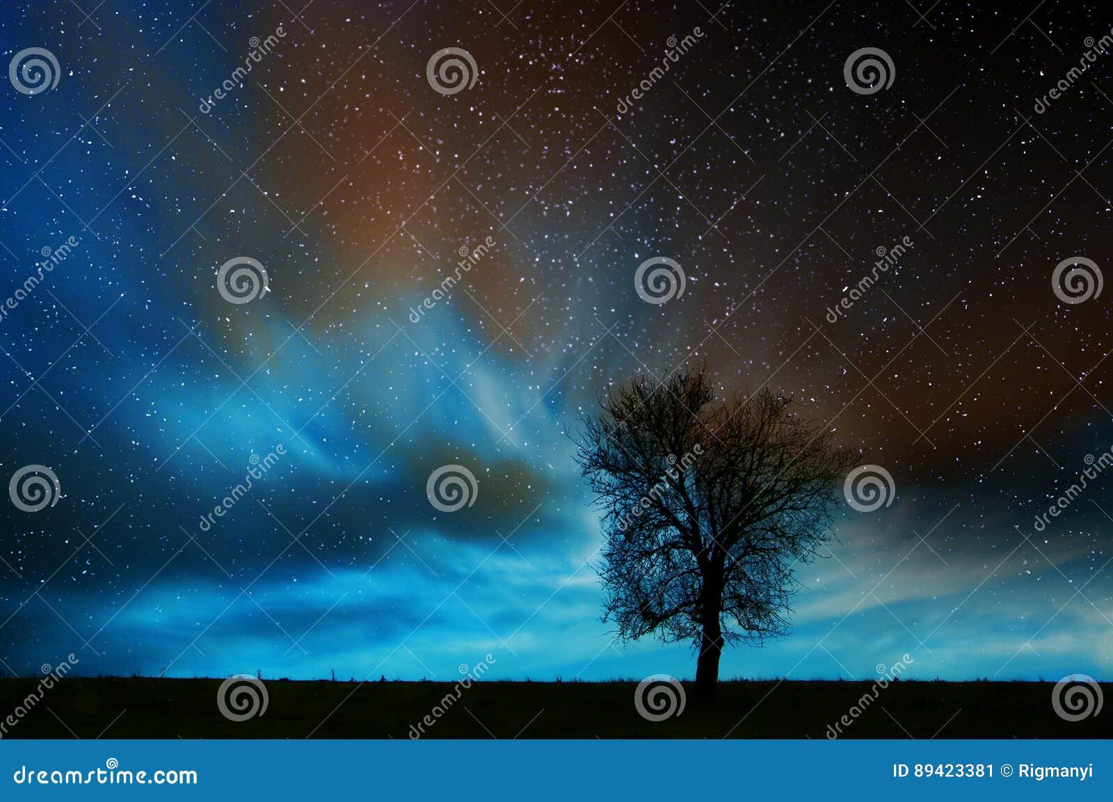 Árvore solitária na noite estrelado