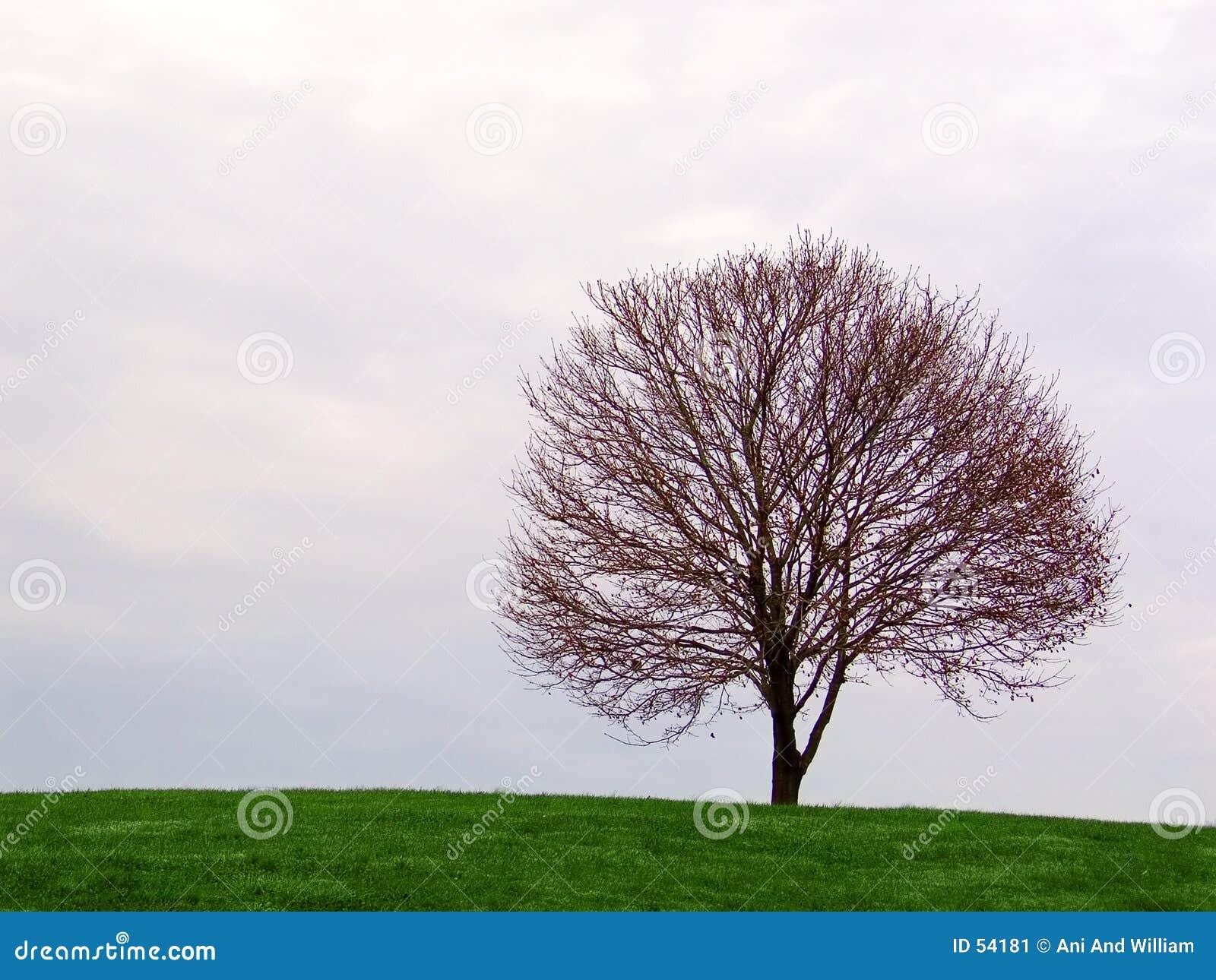 árvore solitária no horizonte