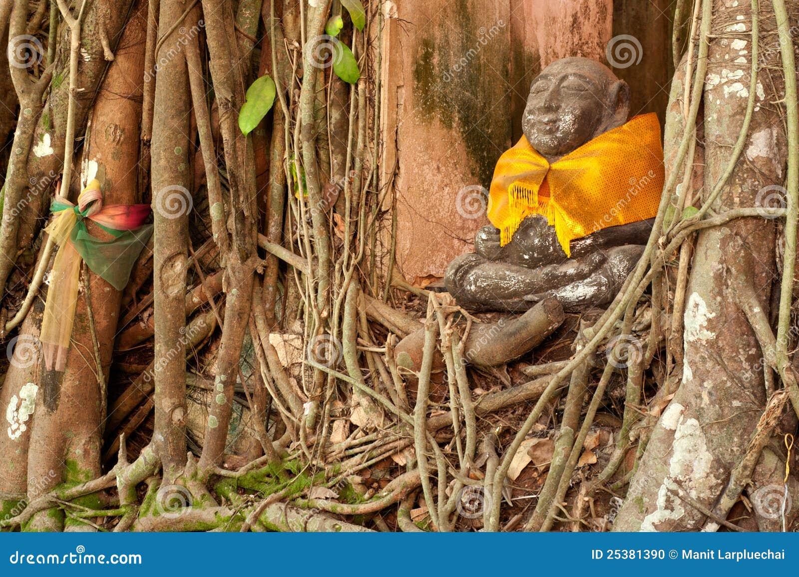 Árvore velha da raiz em torno da estátua da monge na igreja tailandesa.