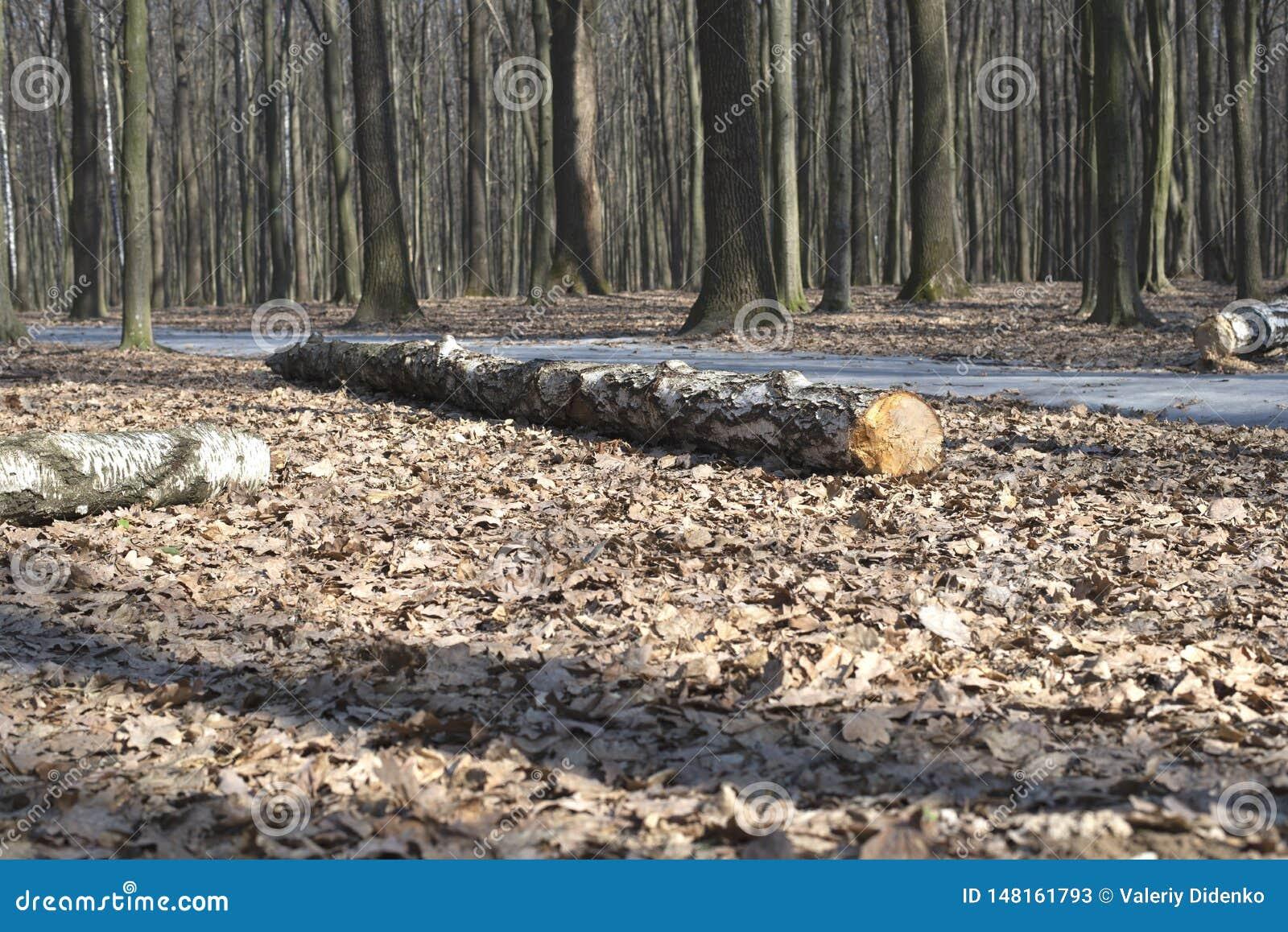Árvore velha na terra