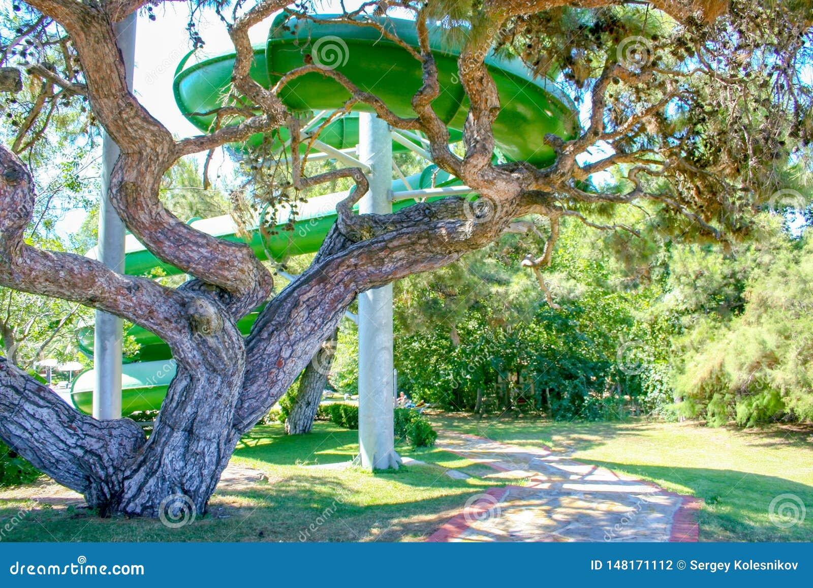 Árvore verde bonita em um hotel perto do waterslide Turquia
