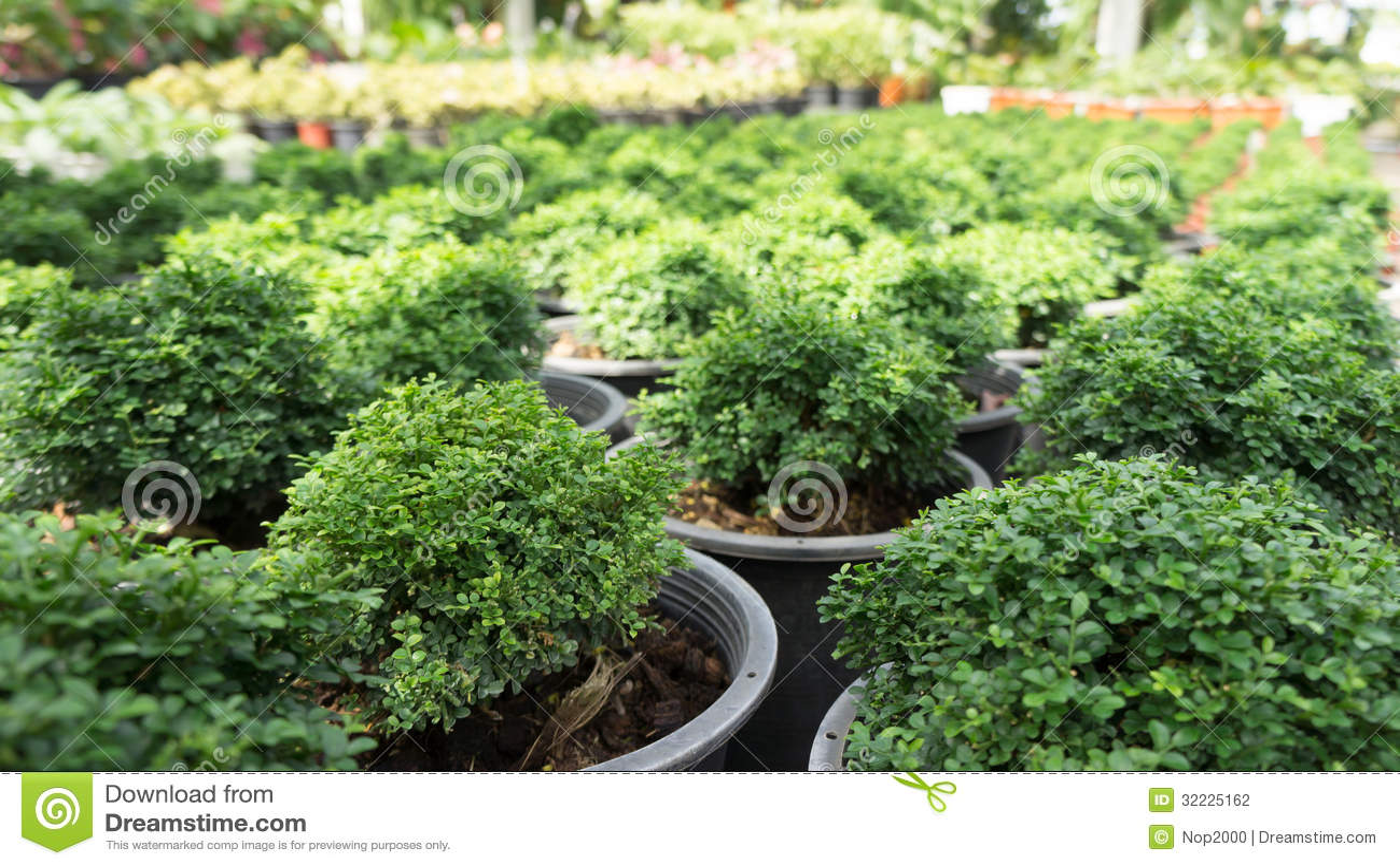 Download Árvore verde do arbusto foto de stock. Imagem de artificial - 32225162