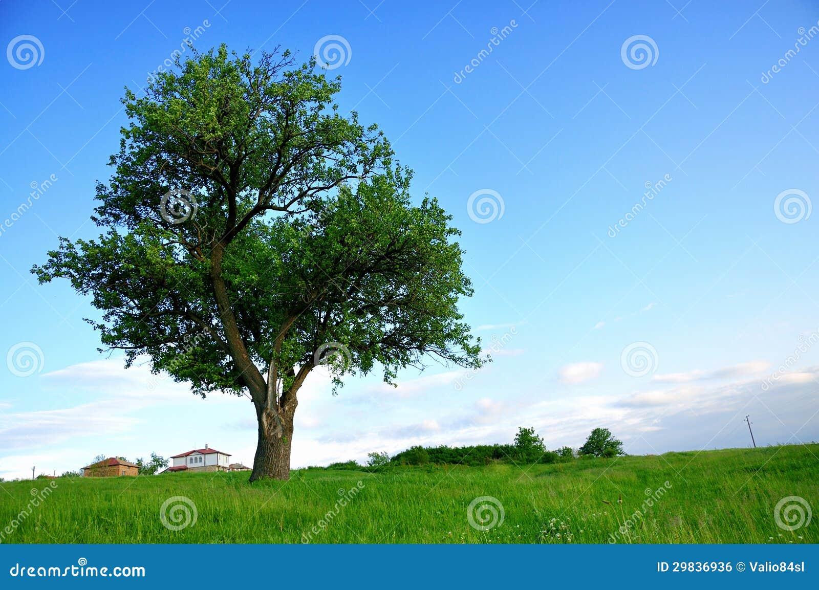 Árvore verde grande