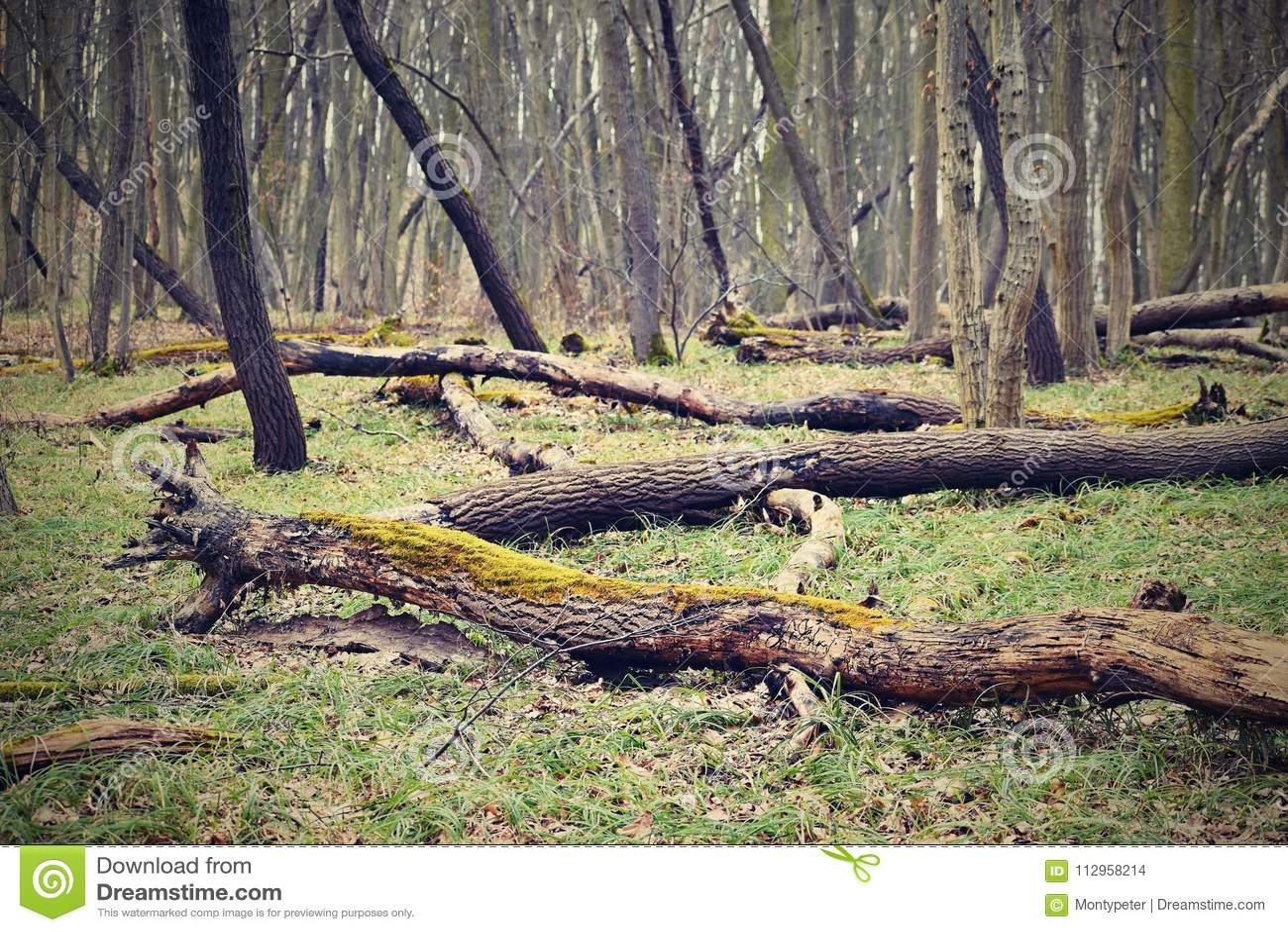 Árvores caídas no fundo colorido natural da floresta