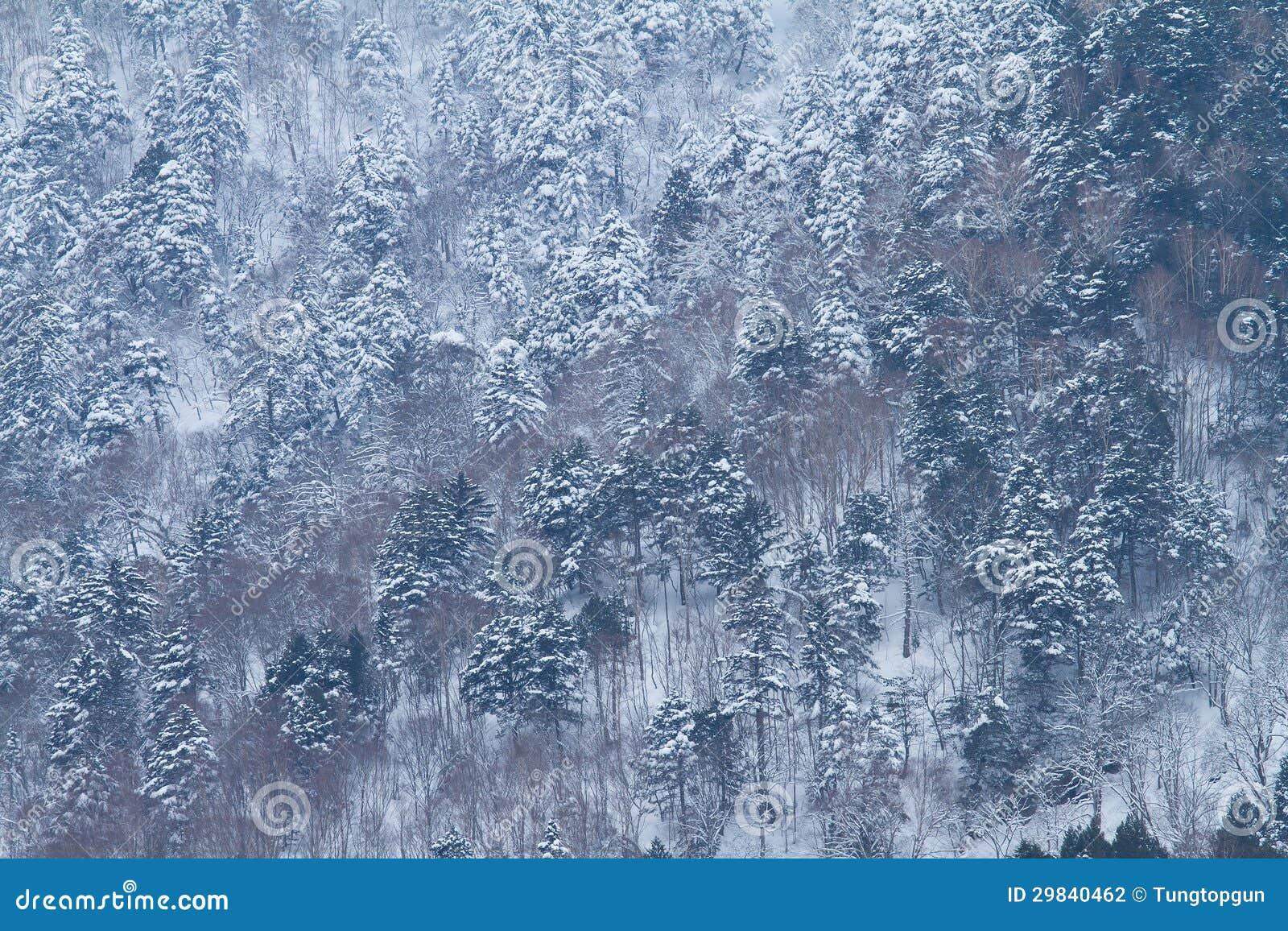 Árvore com neve