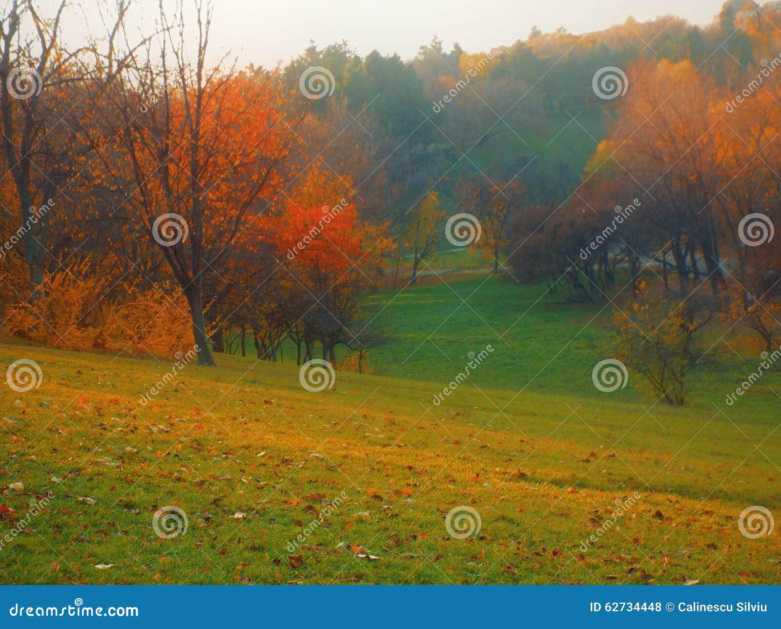 Árvores coloridas dentro na zona de montanha em um dia nevoento de novembro