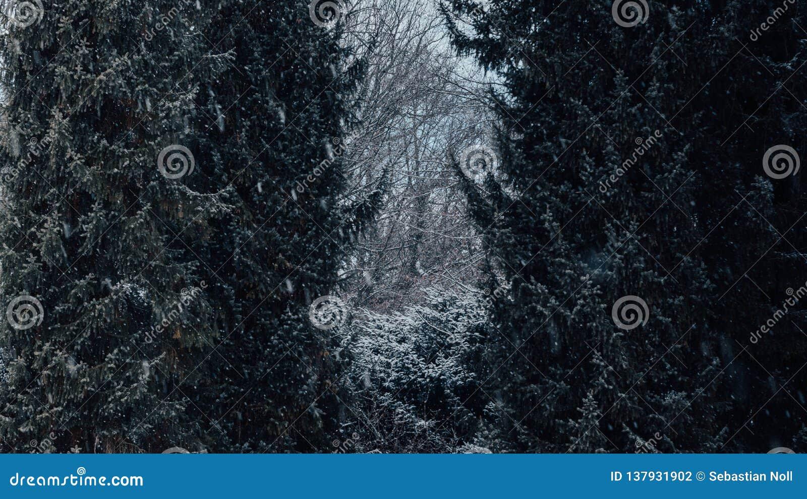 Árvores com neve nela