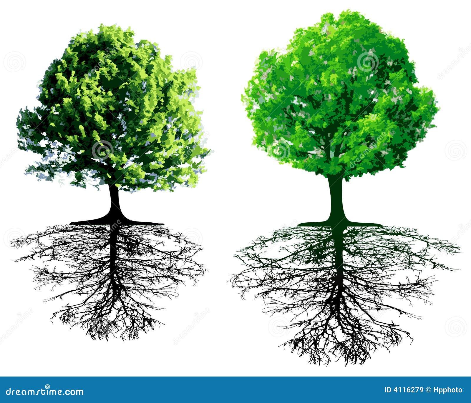 Árvores com raizes