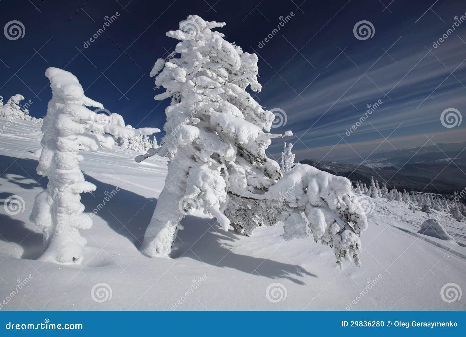 Árvores congeladas