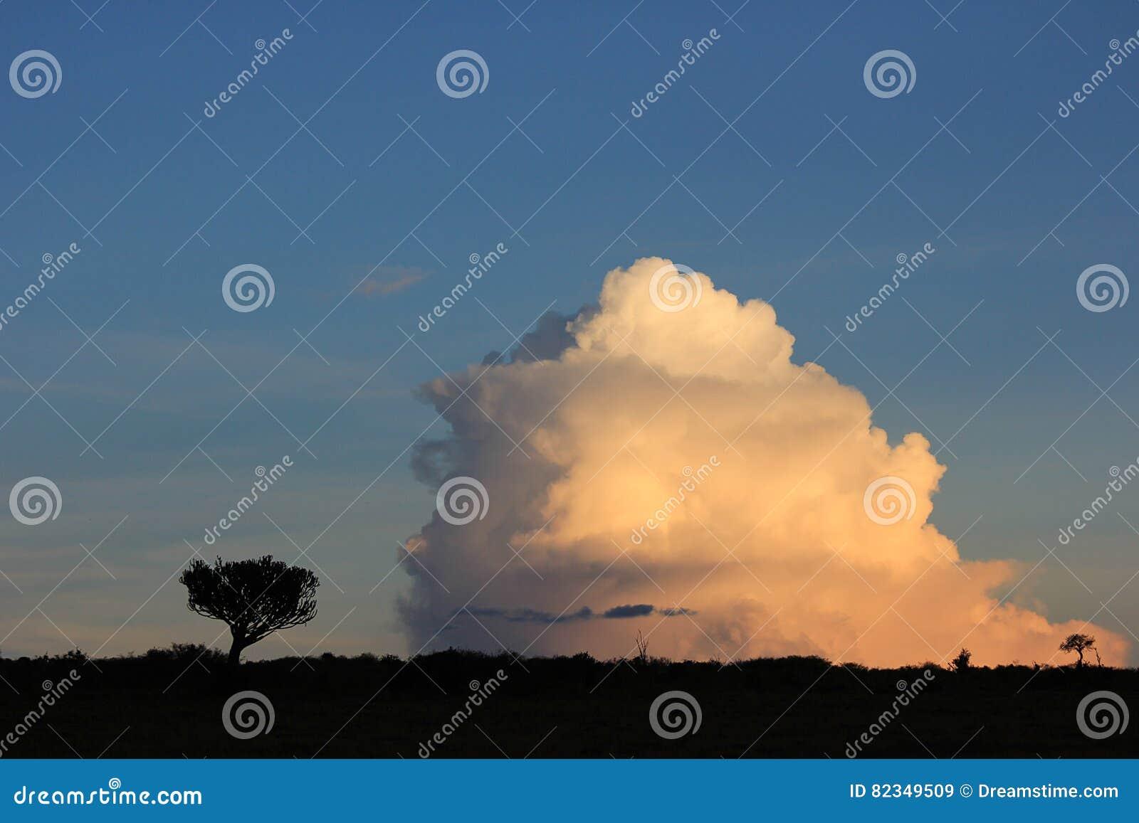Árvores contra nuvens