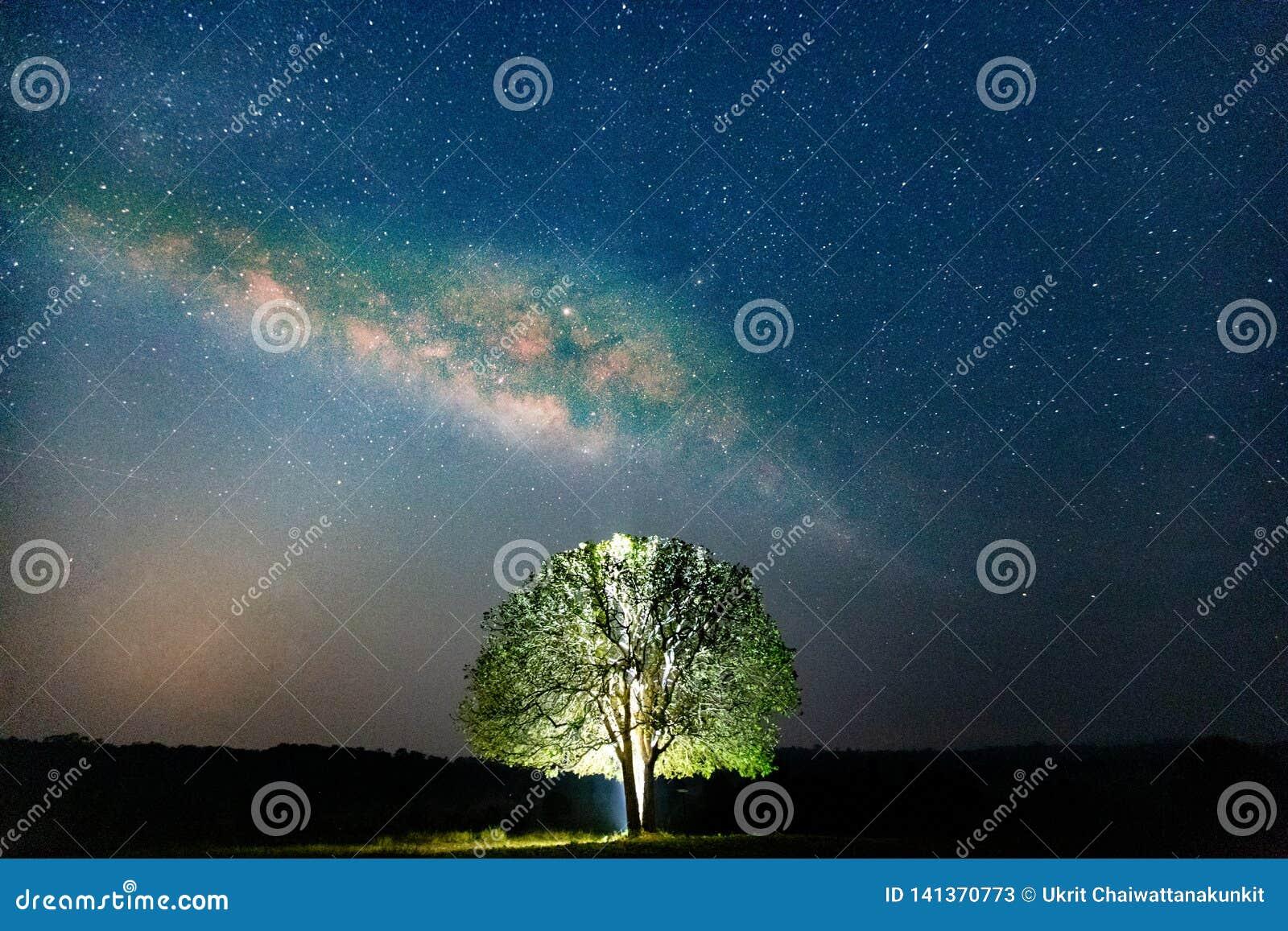 Árvores contra o céu estrelado com a fotografia longa da exposição da Via Látea com grão