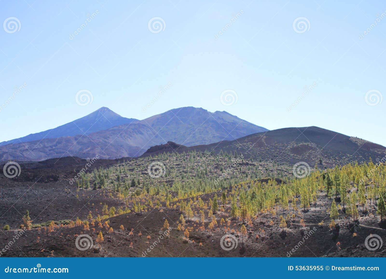 Árvores da lava