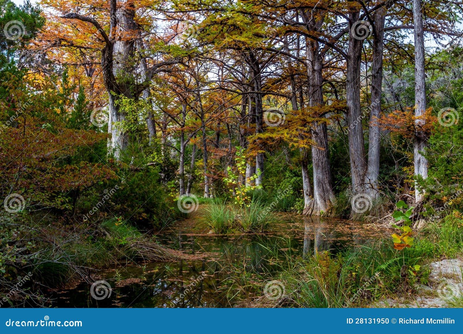 Árvores de Chipre na angra de Hamilton