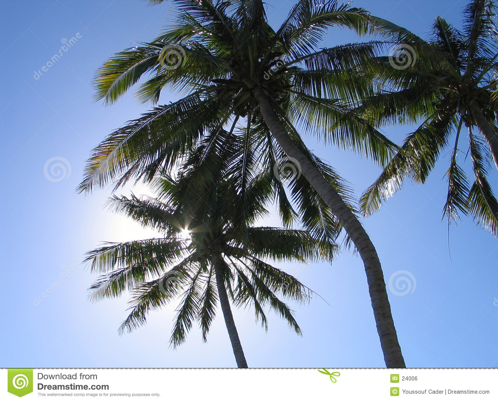 Árvores de coco