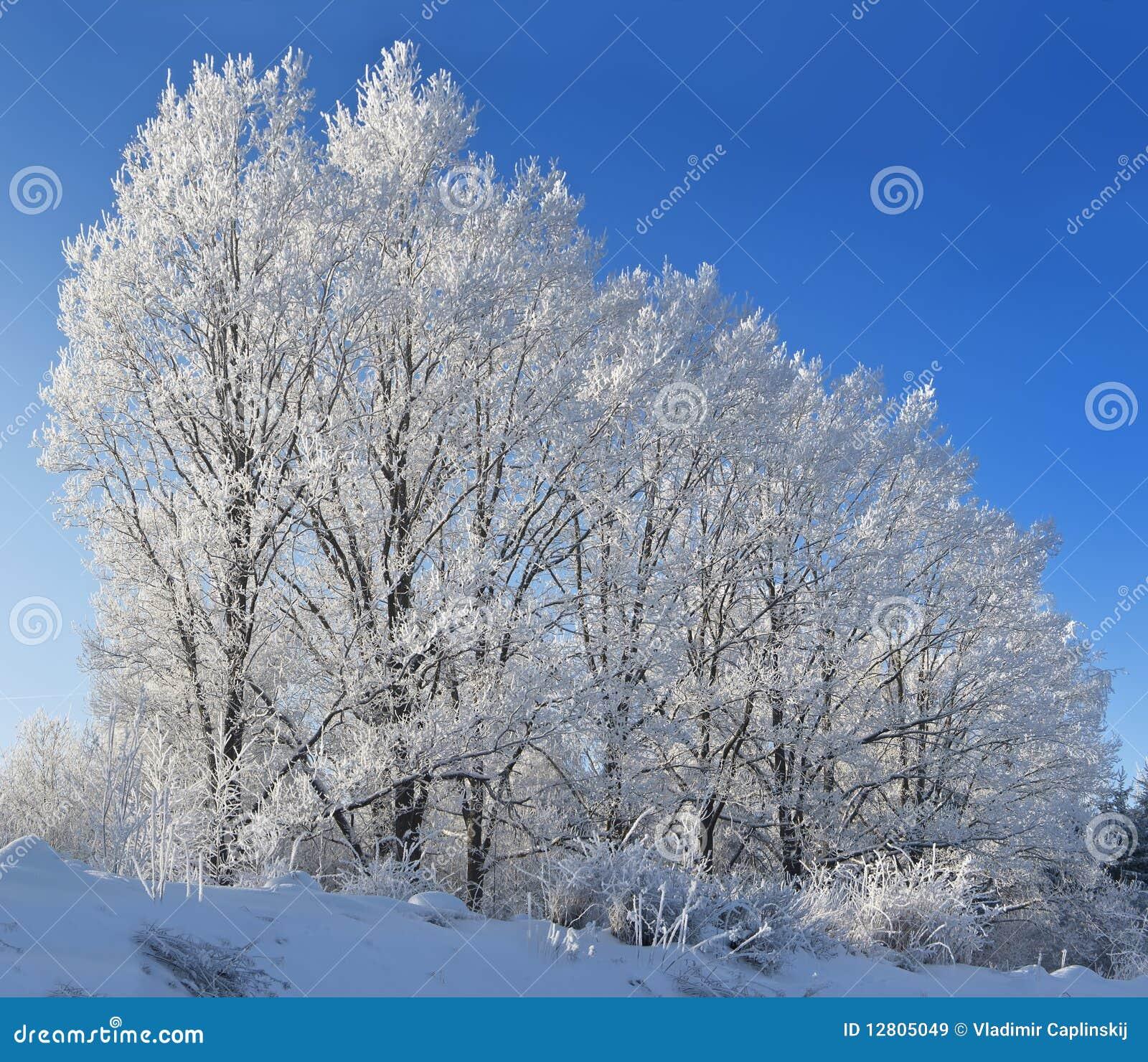 Árvores de encontro ao céu azul