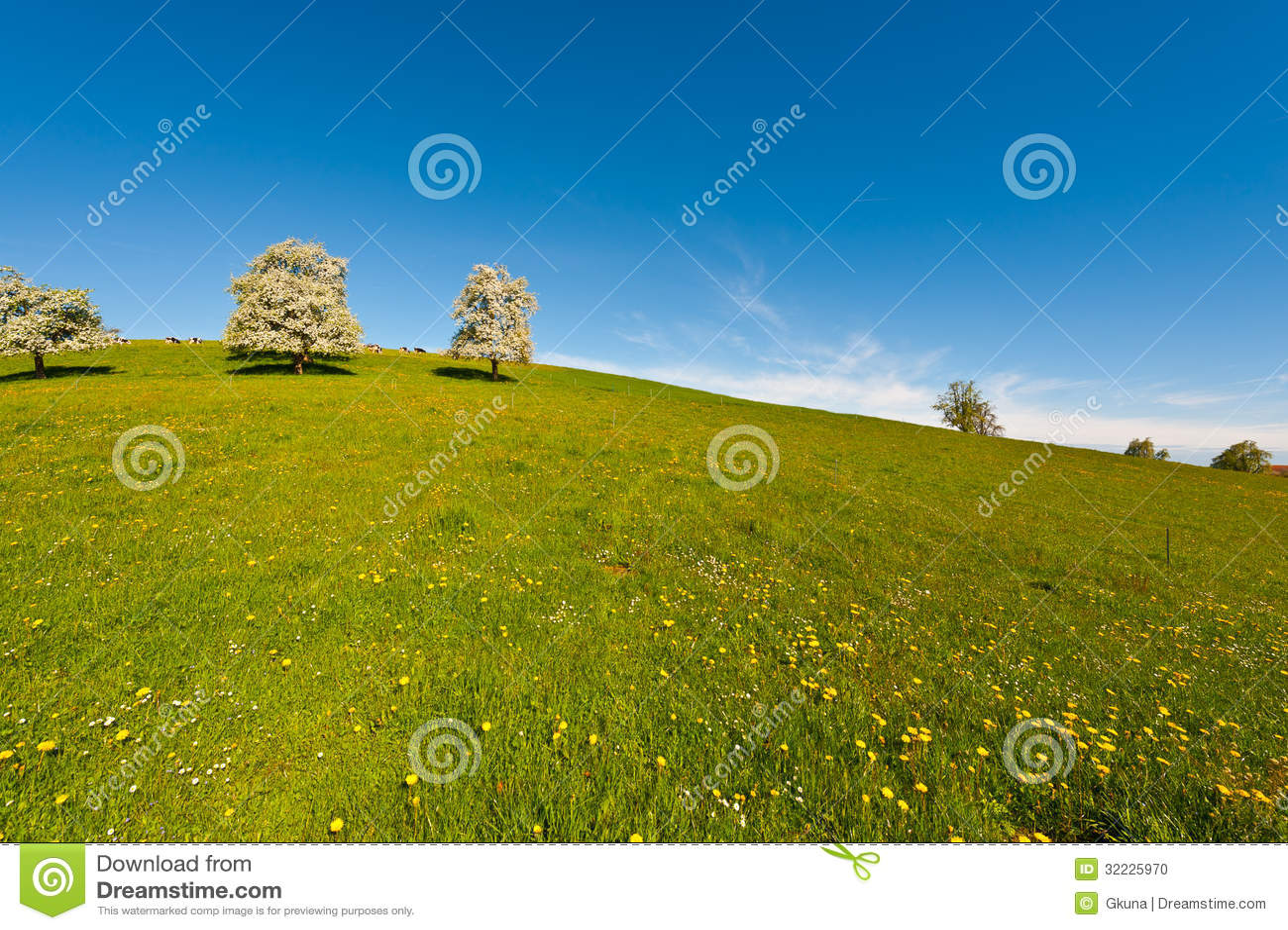 Download Árvores de florescência foto de stock. Imagem de azul - 32225970