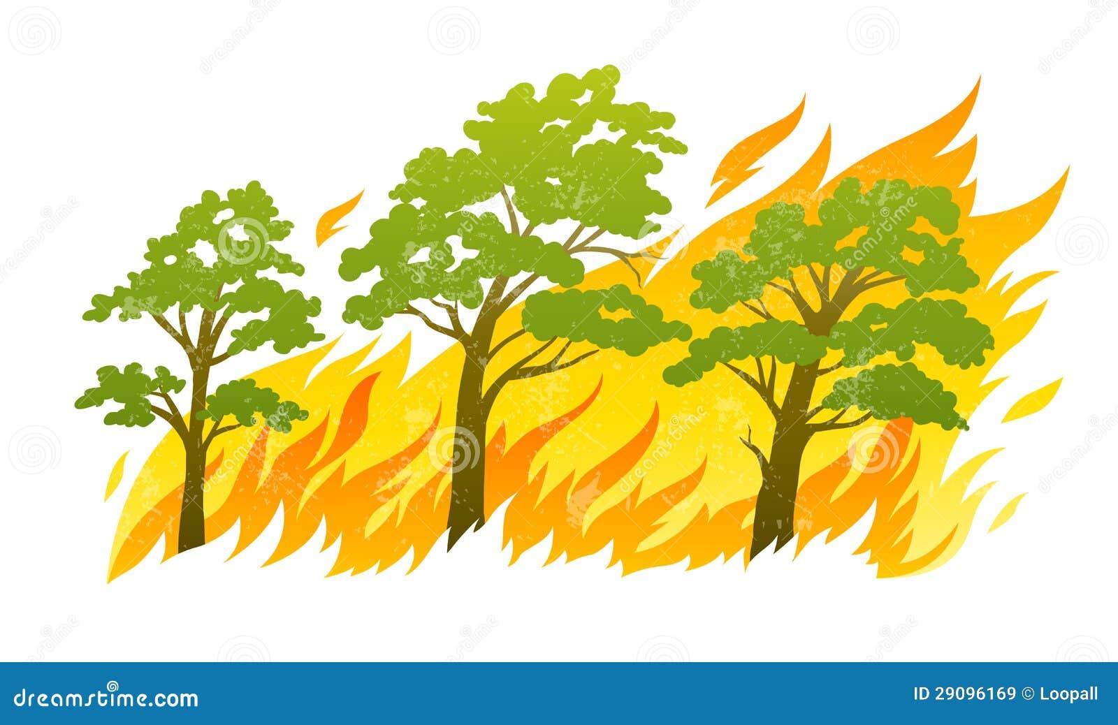 Árvores de floresta ardentes em chamas do incêndio