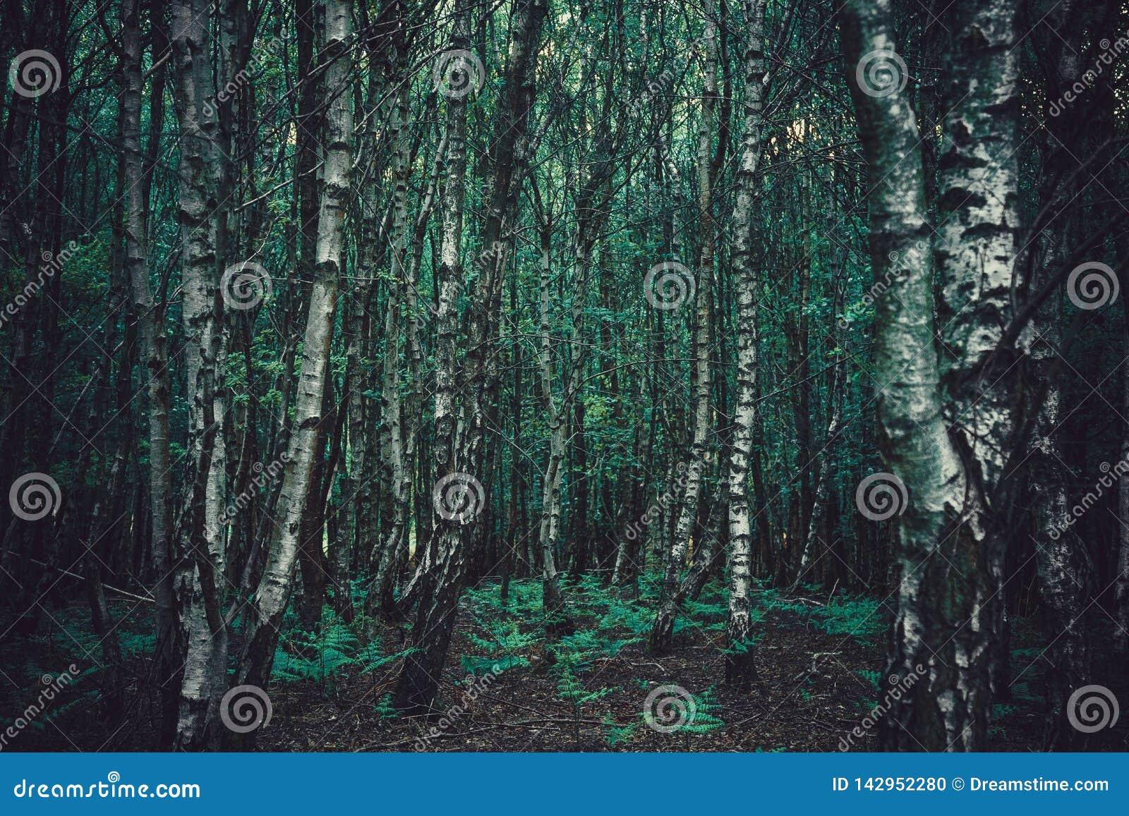 Árvores de floresta densas