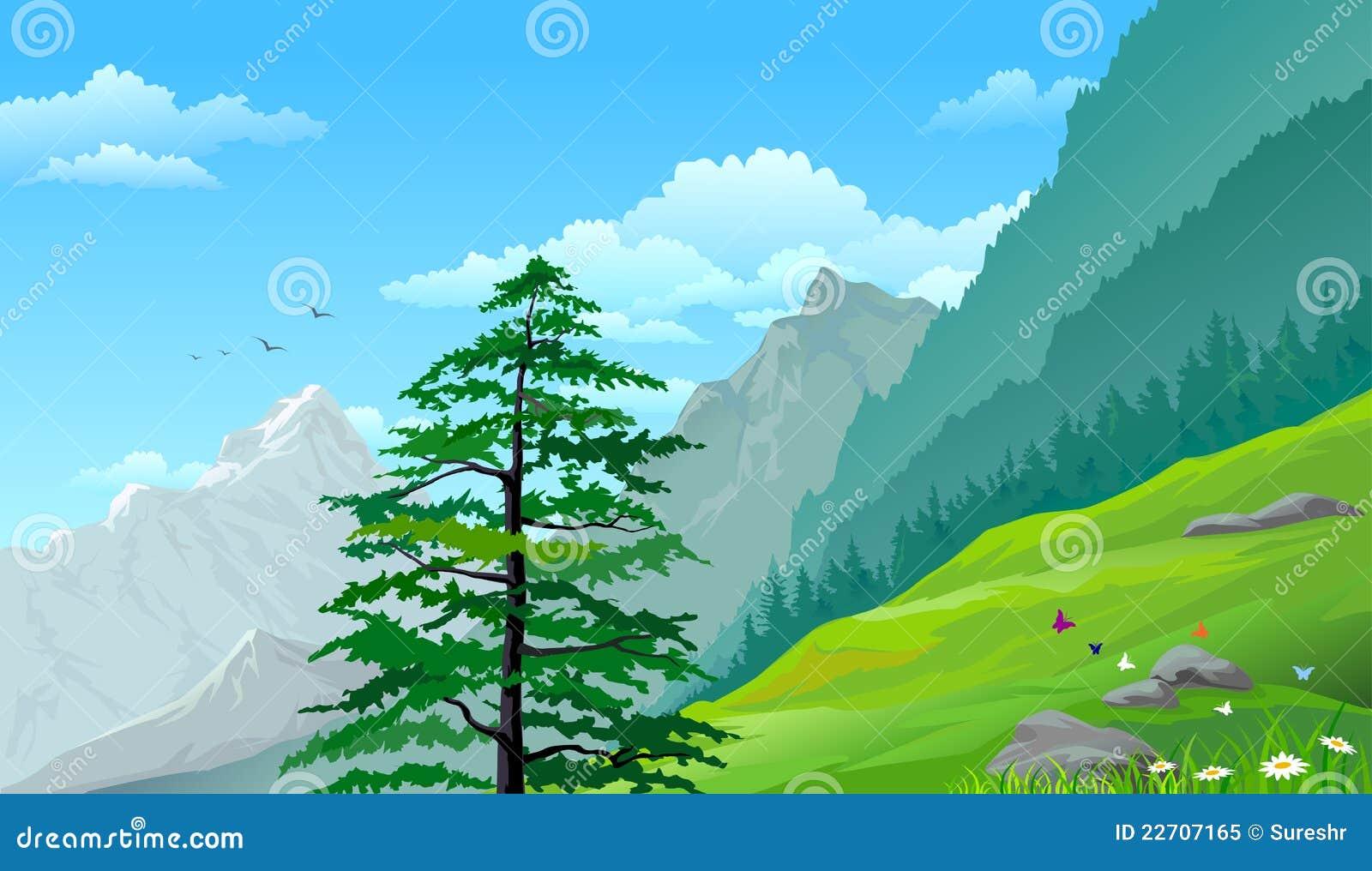 Árvores de pinho do montanhês e montanhas distantes