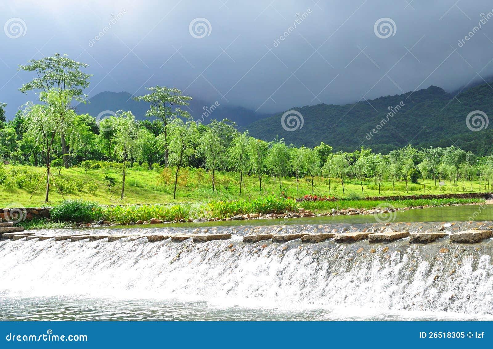 Árvores de salgueiro no beira-rio