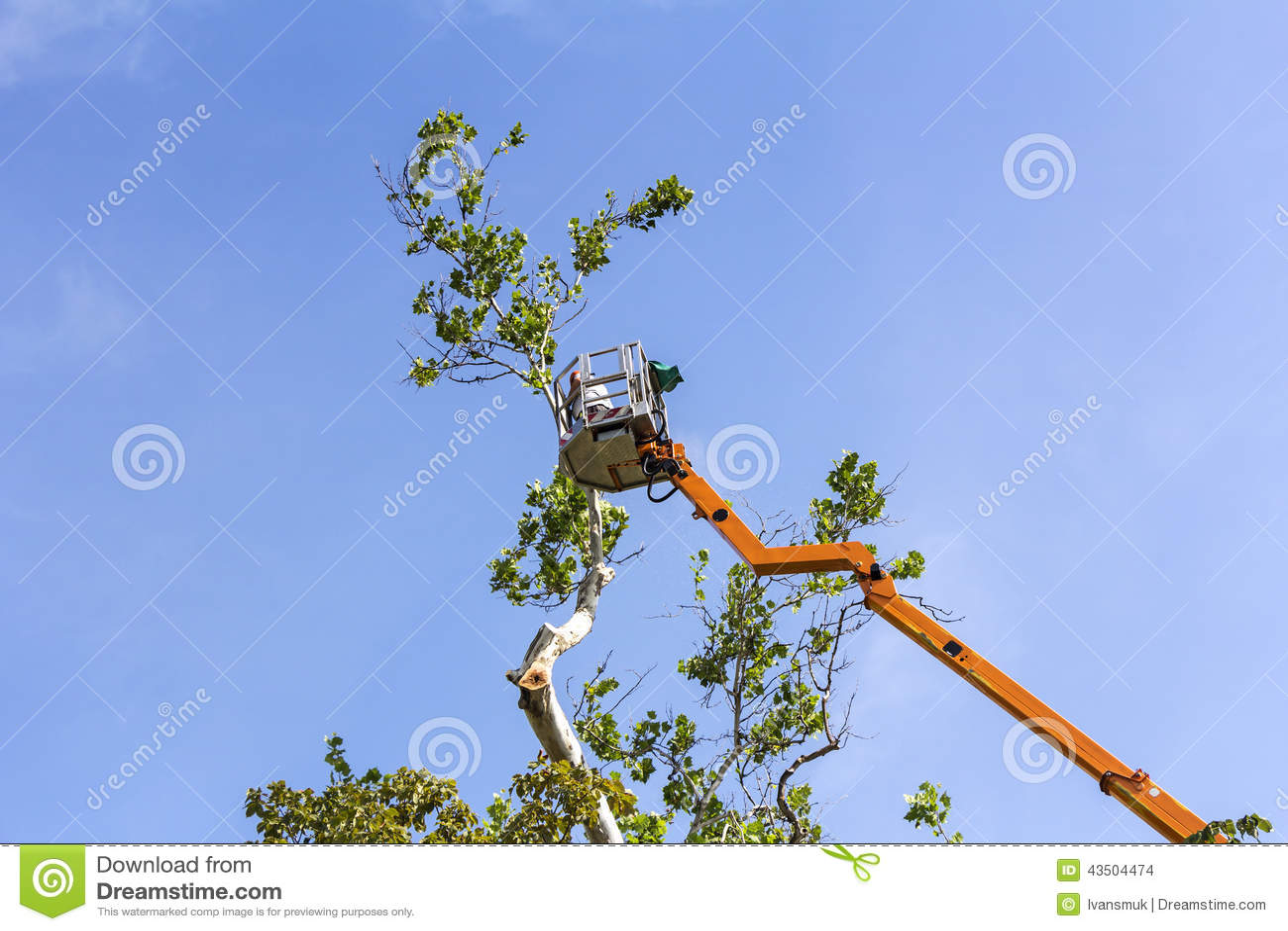 Árvores do aparamento com uma serra de cadeia