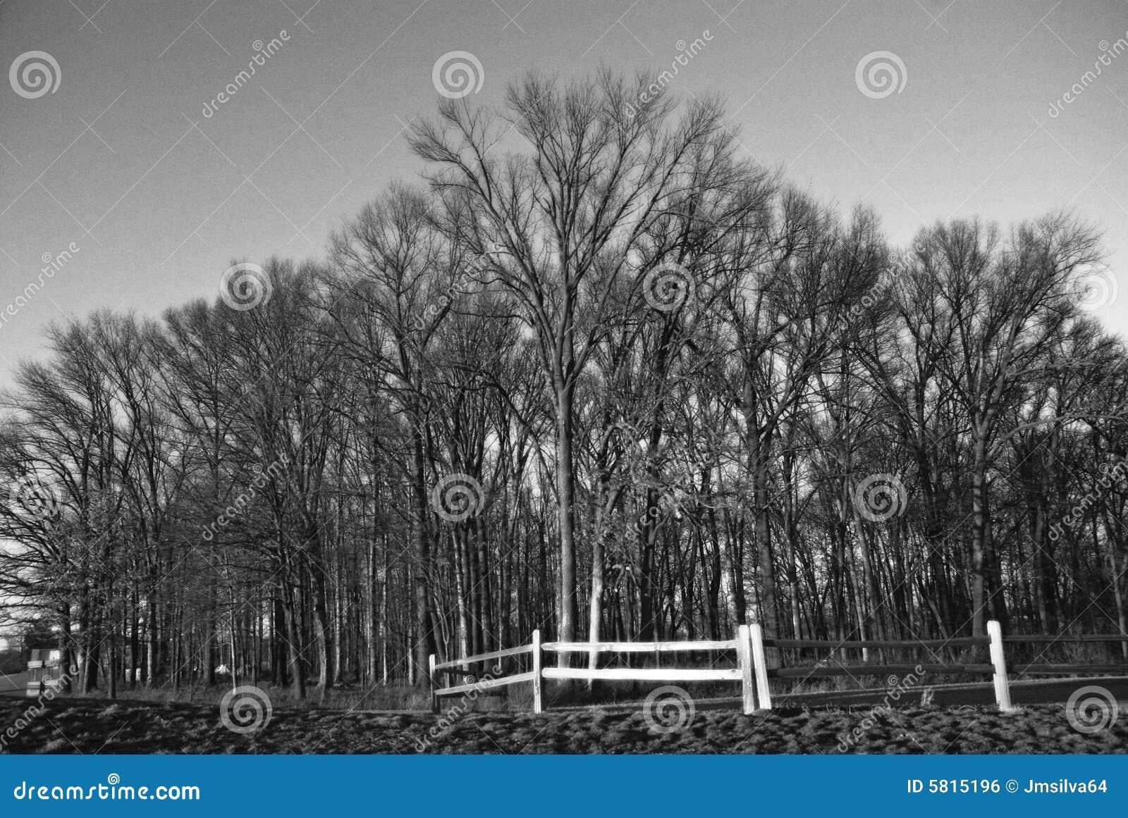 Árvores do inverno.