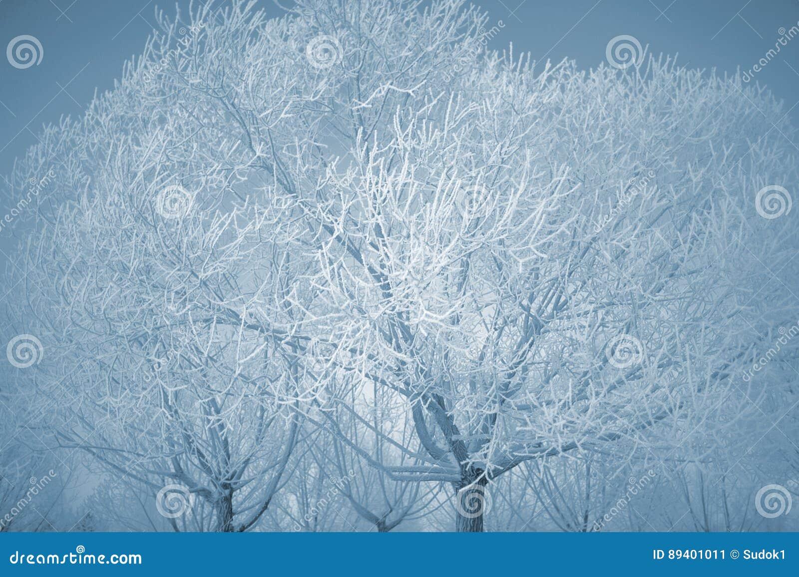 Árvores do inverno cobertas com uma camada grossa de geada