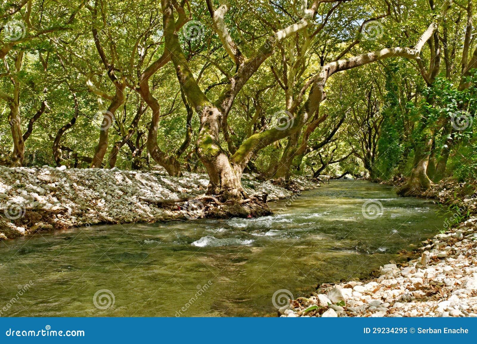 Download Árvores Do Rio E Do Sicômoro Imagem de Stock - Imagem de paisagem, córrego: 29234295