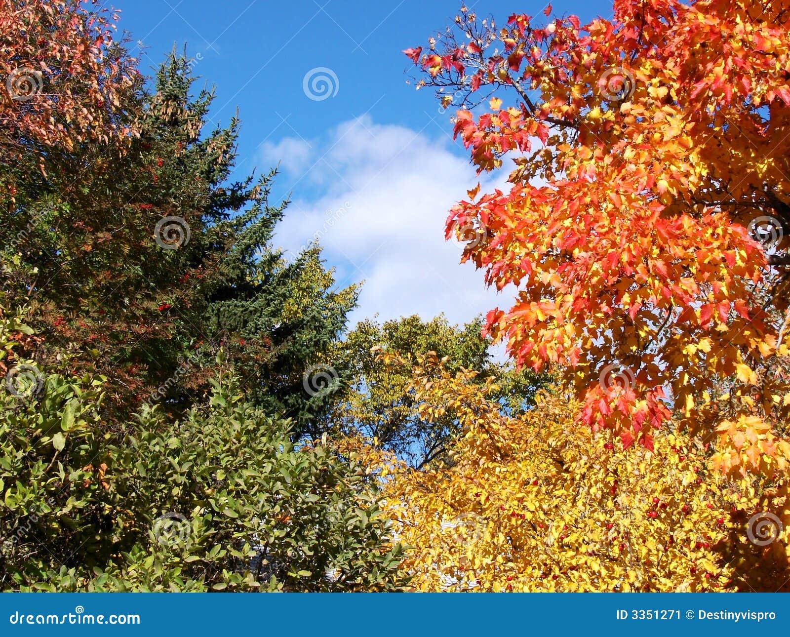 Árvores e céu da queda