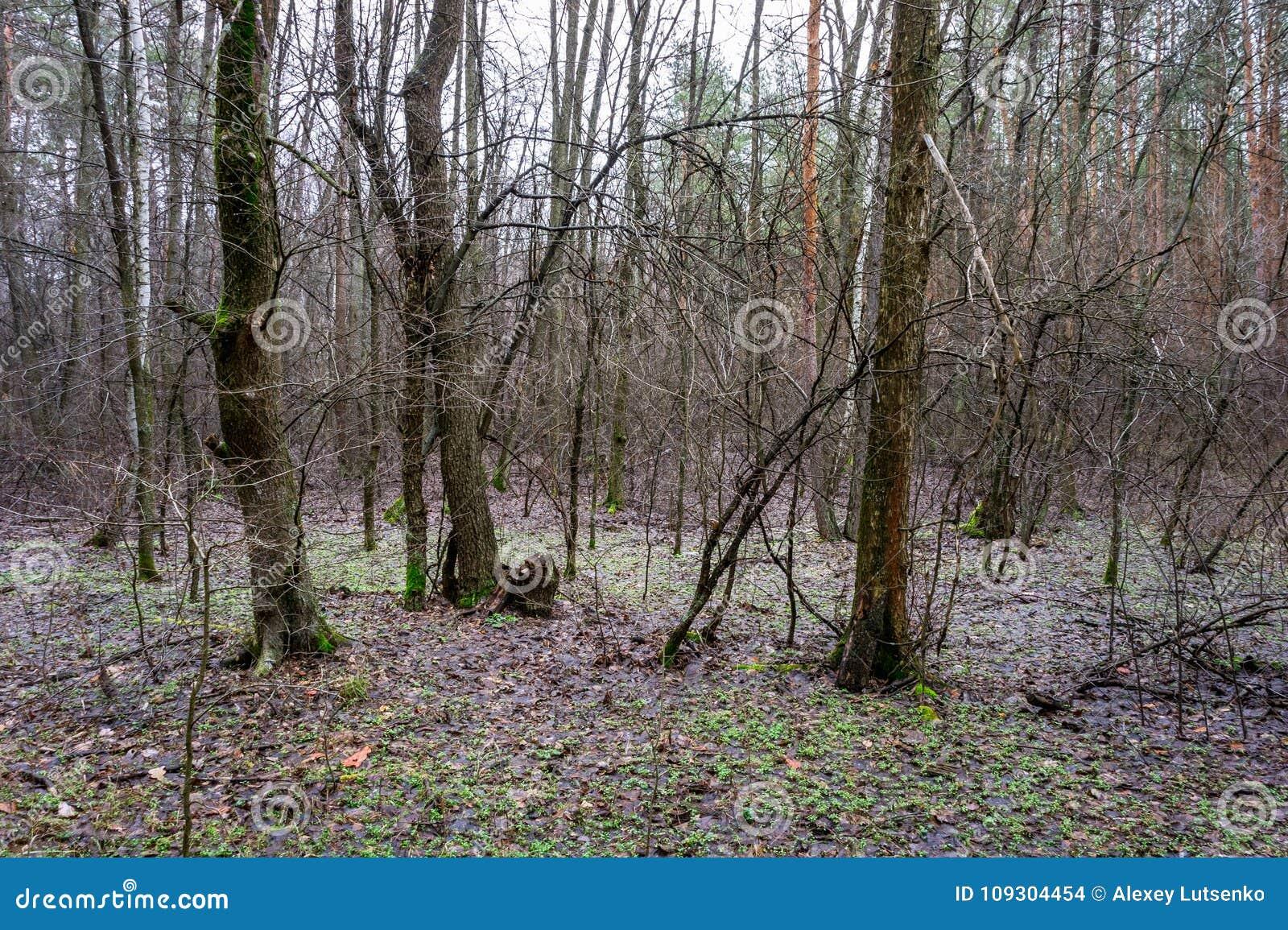 Árvores e musgo verde na floresta do outono