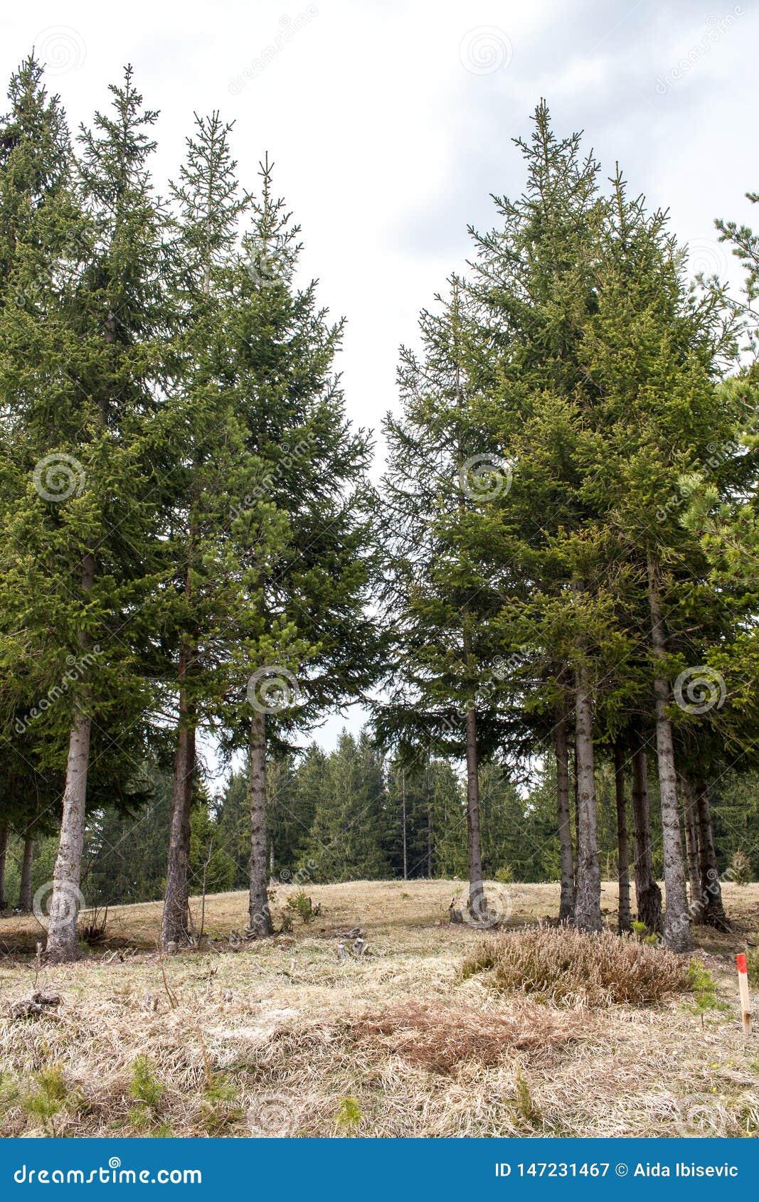Árvores em Forest Forming uma fuga de caminhada natural