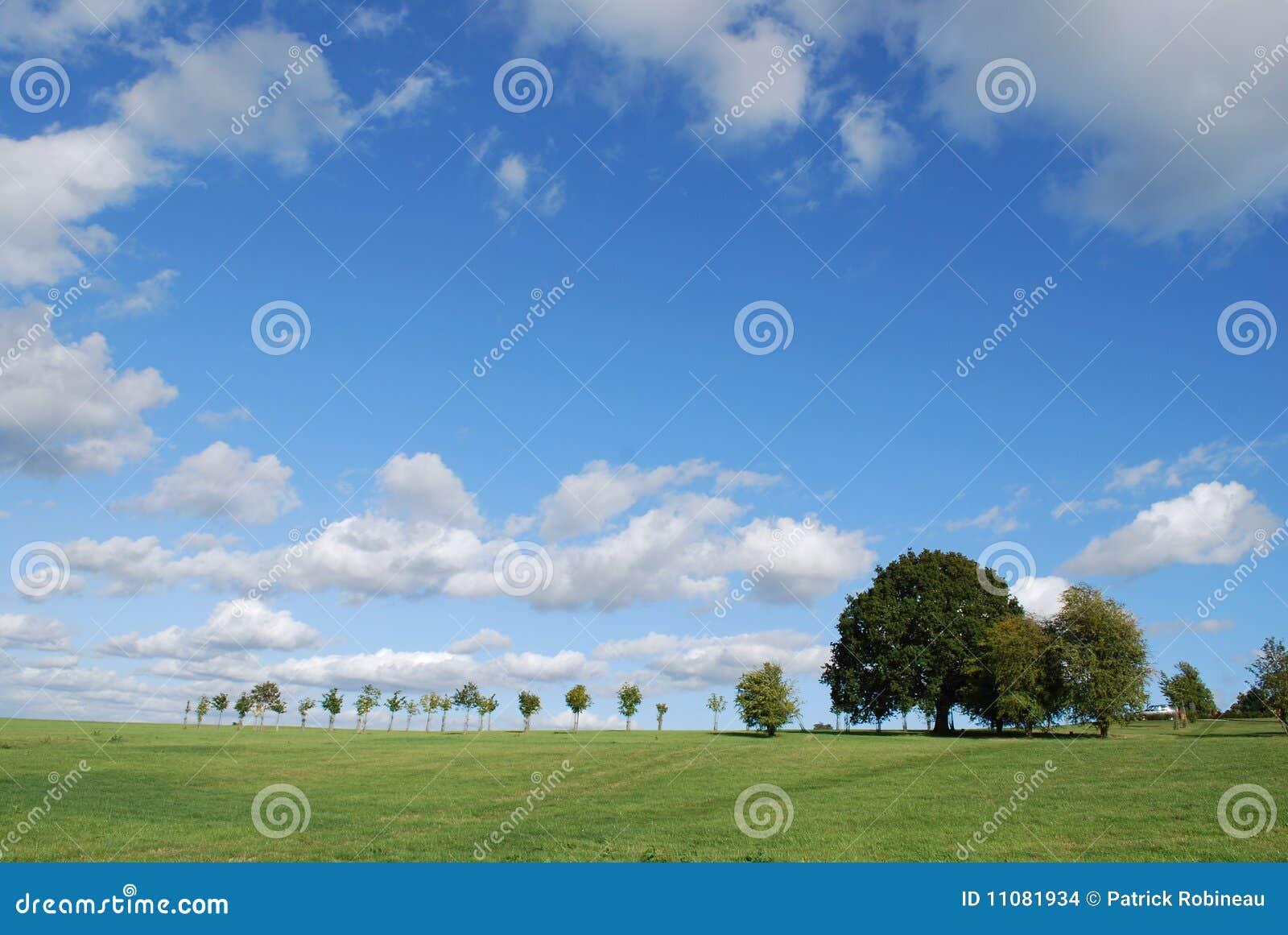 Árvores em Hampshire