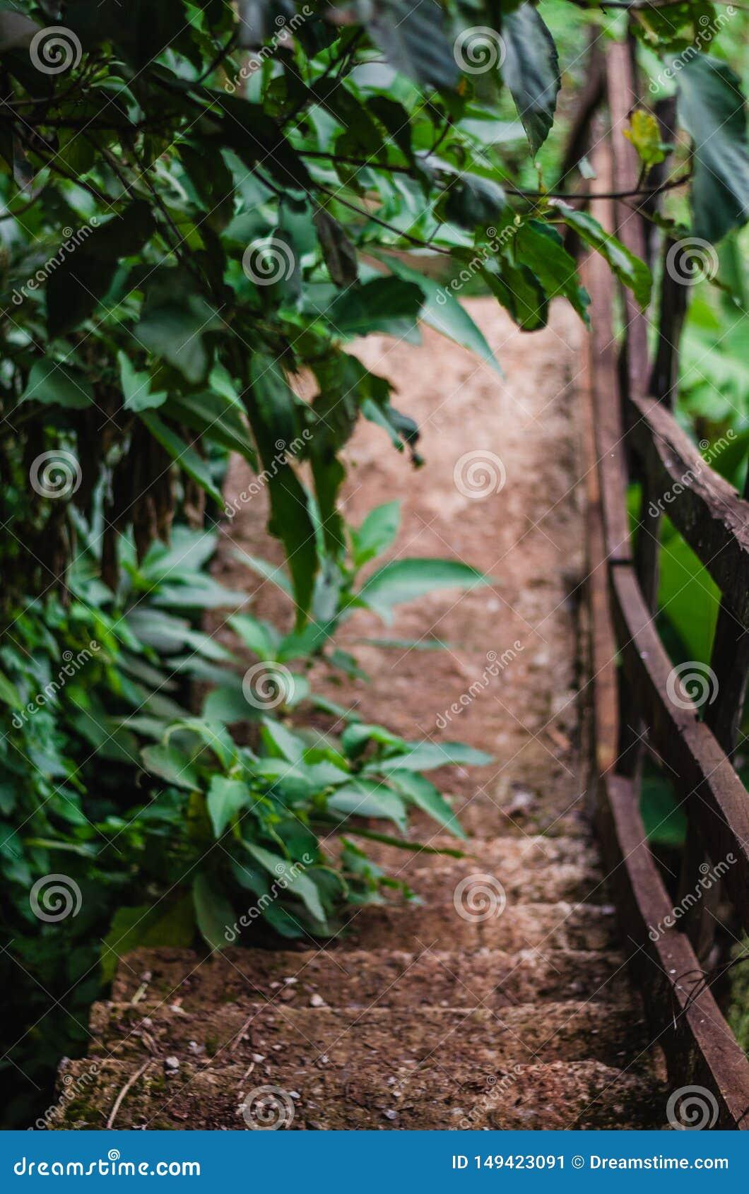 Árvores em um trajeto abaixo de uma floresta