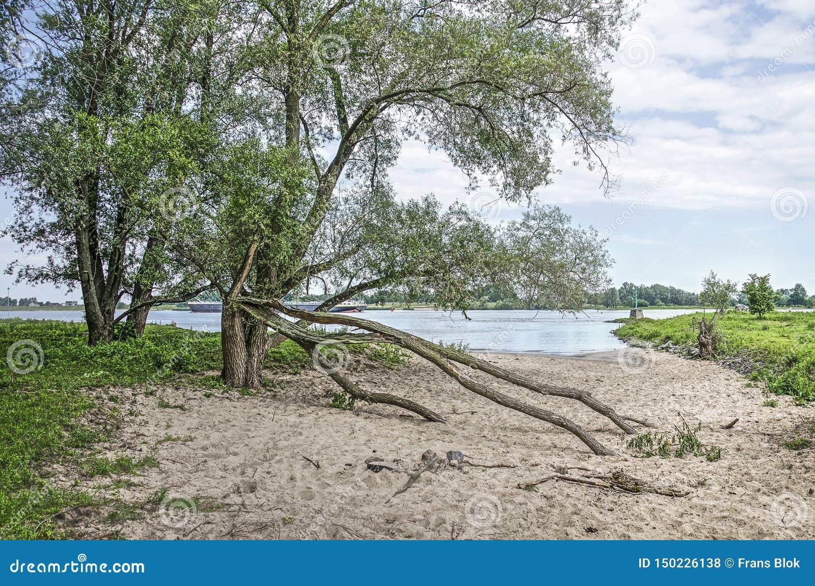 Árvores em uma praia do rio