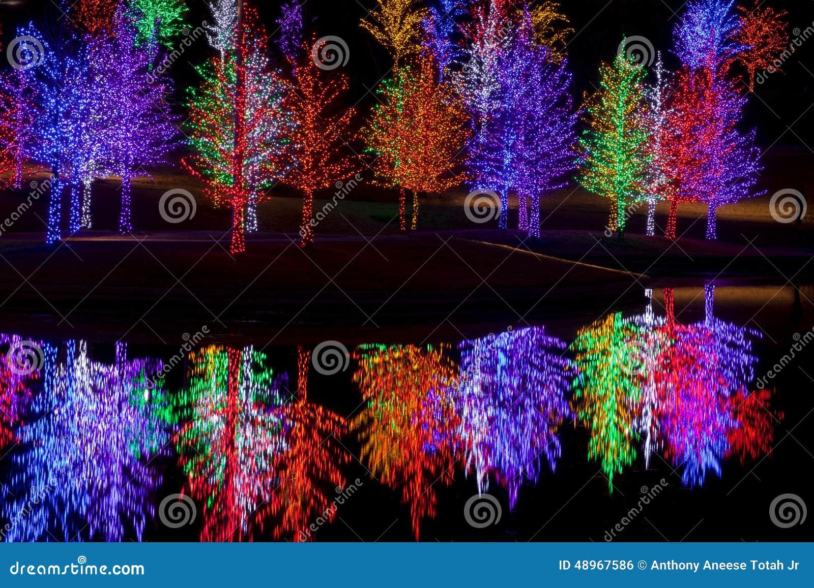 Árvores envolvidas em luzes do diodo emissor de luz para o Natal