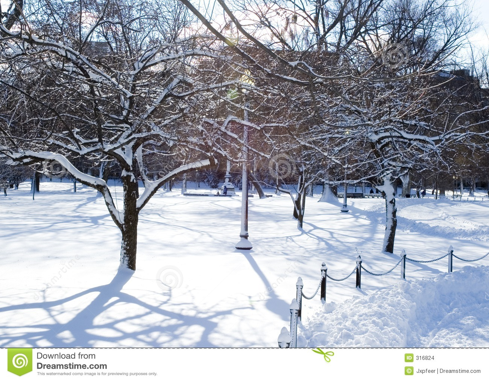 Árvores geladas no parque