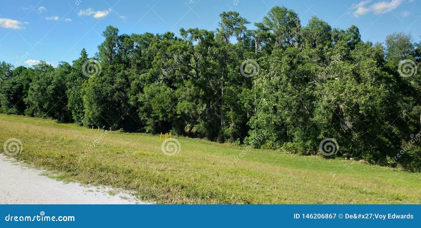 Árvores gostosos e planícies