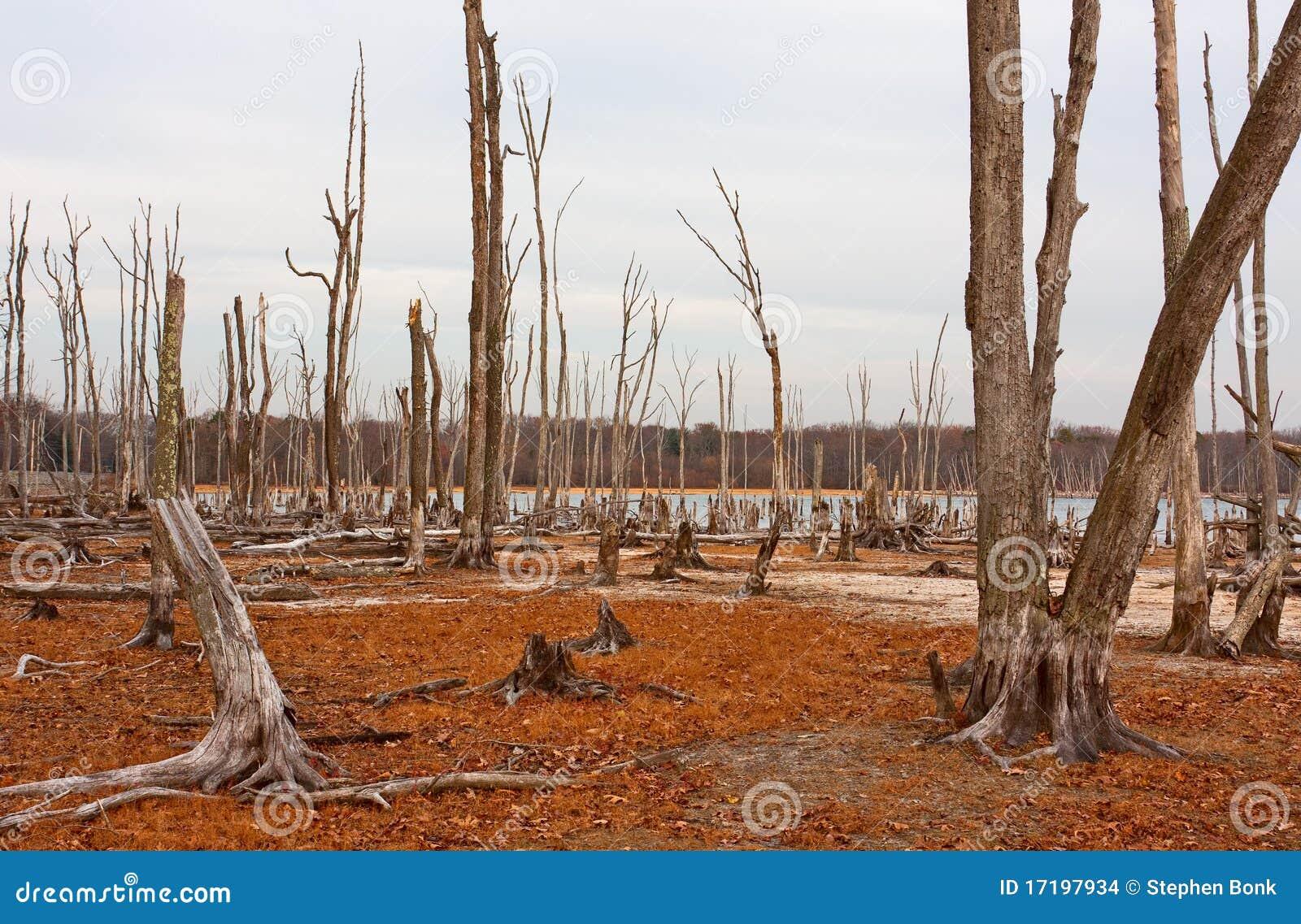 Árvores inoperantes