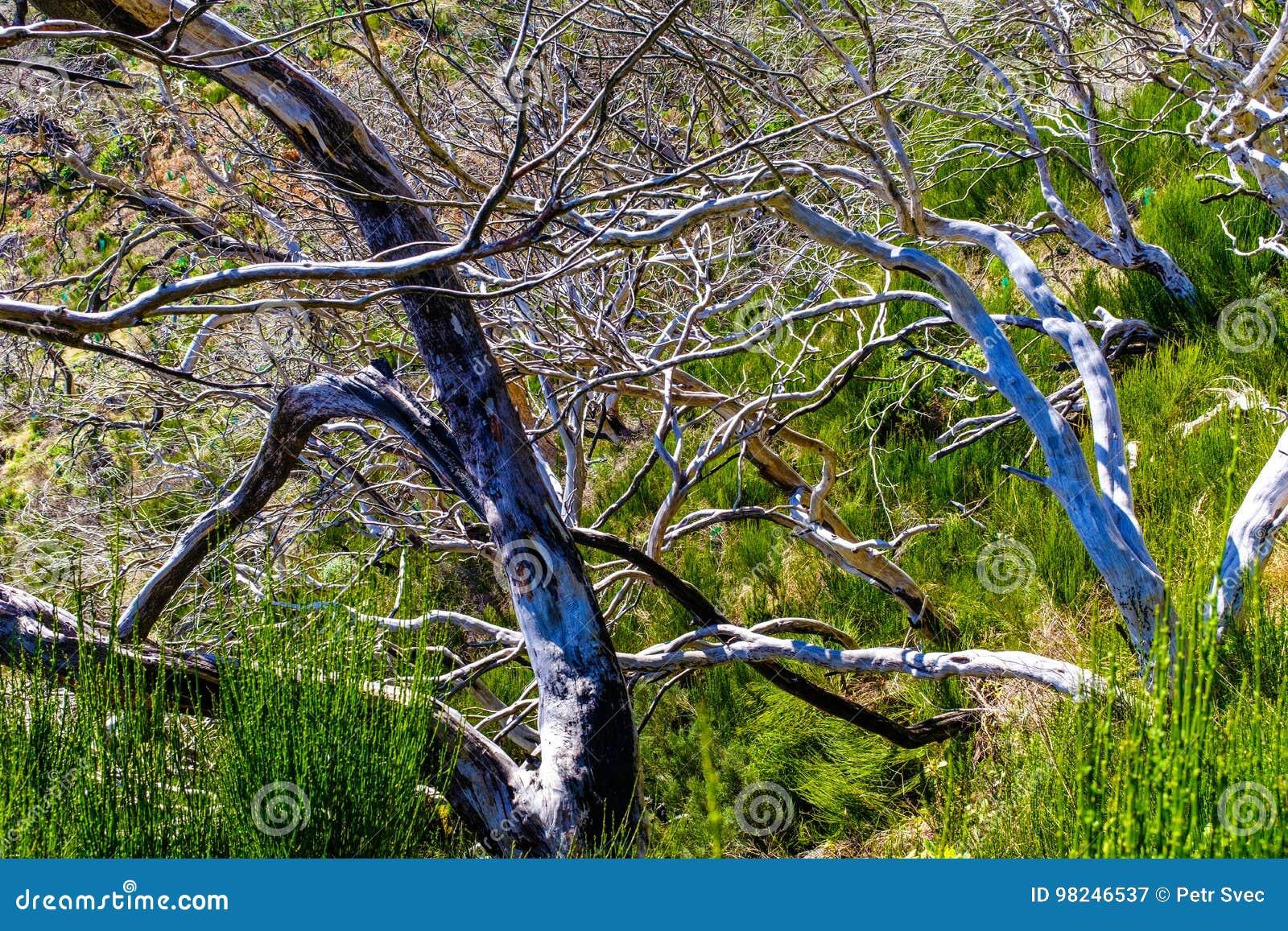 Árvores inoperantes altas nas montanhas