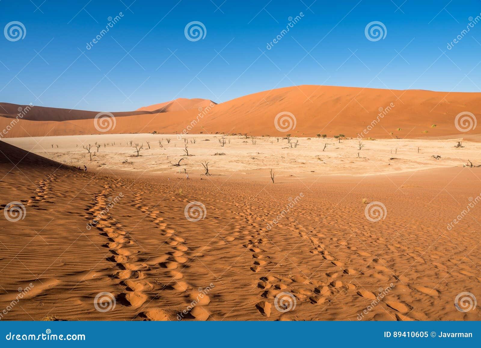 Árvores inoperantes de Camelthorn e dunas vermelhas, Deadvlei, Sossusvlei, Namíbia