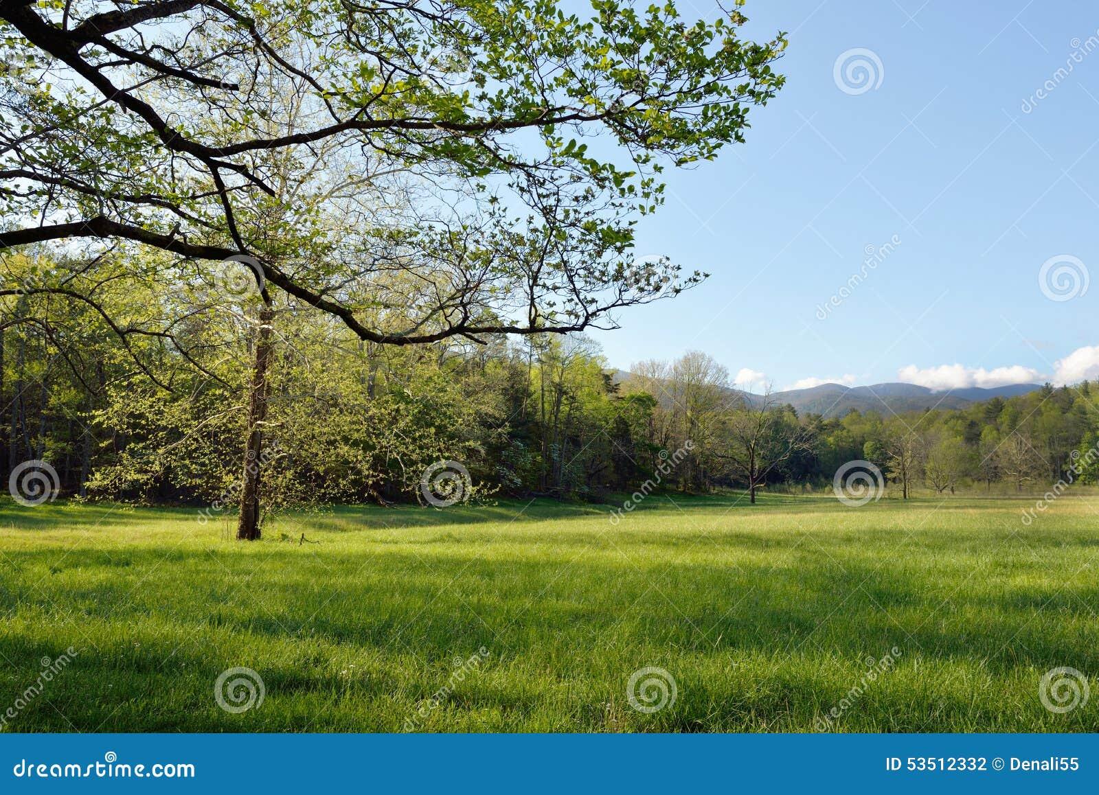 Árvores na primavera, angra de Cades